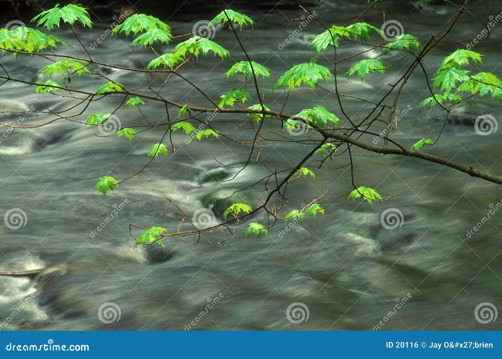 De bladeren van de lente