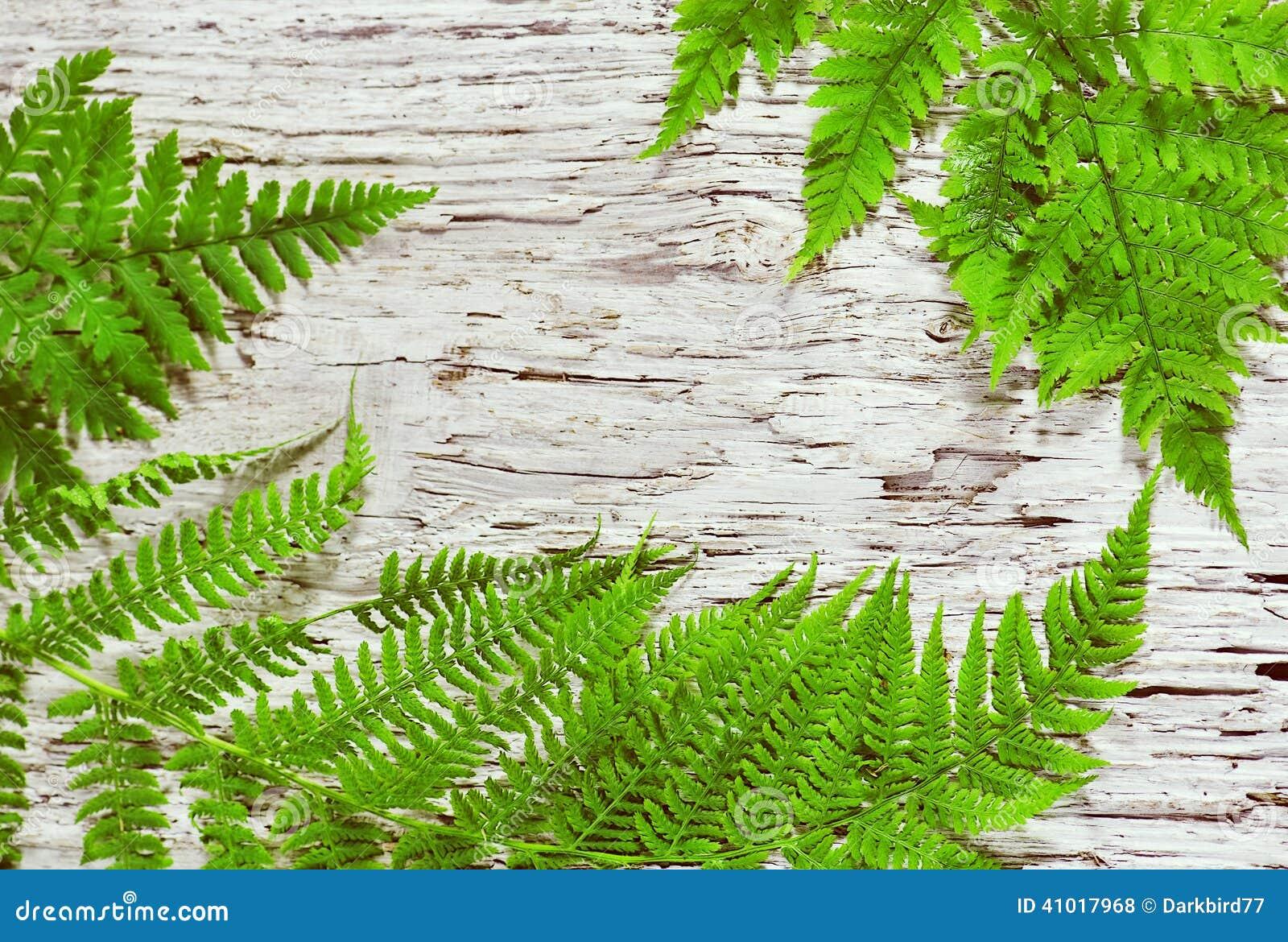 De bladeren van de varen op het oude hout