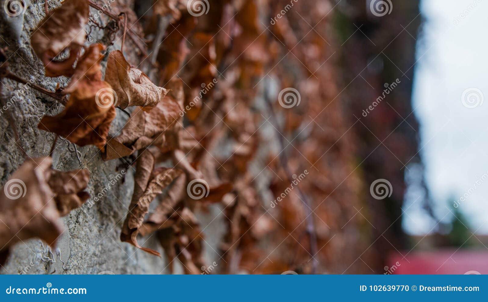 De bladeren van de herfst bepalen het spel van kleuren