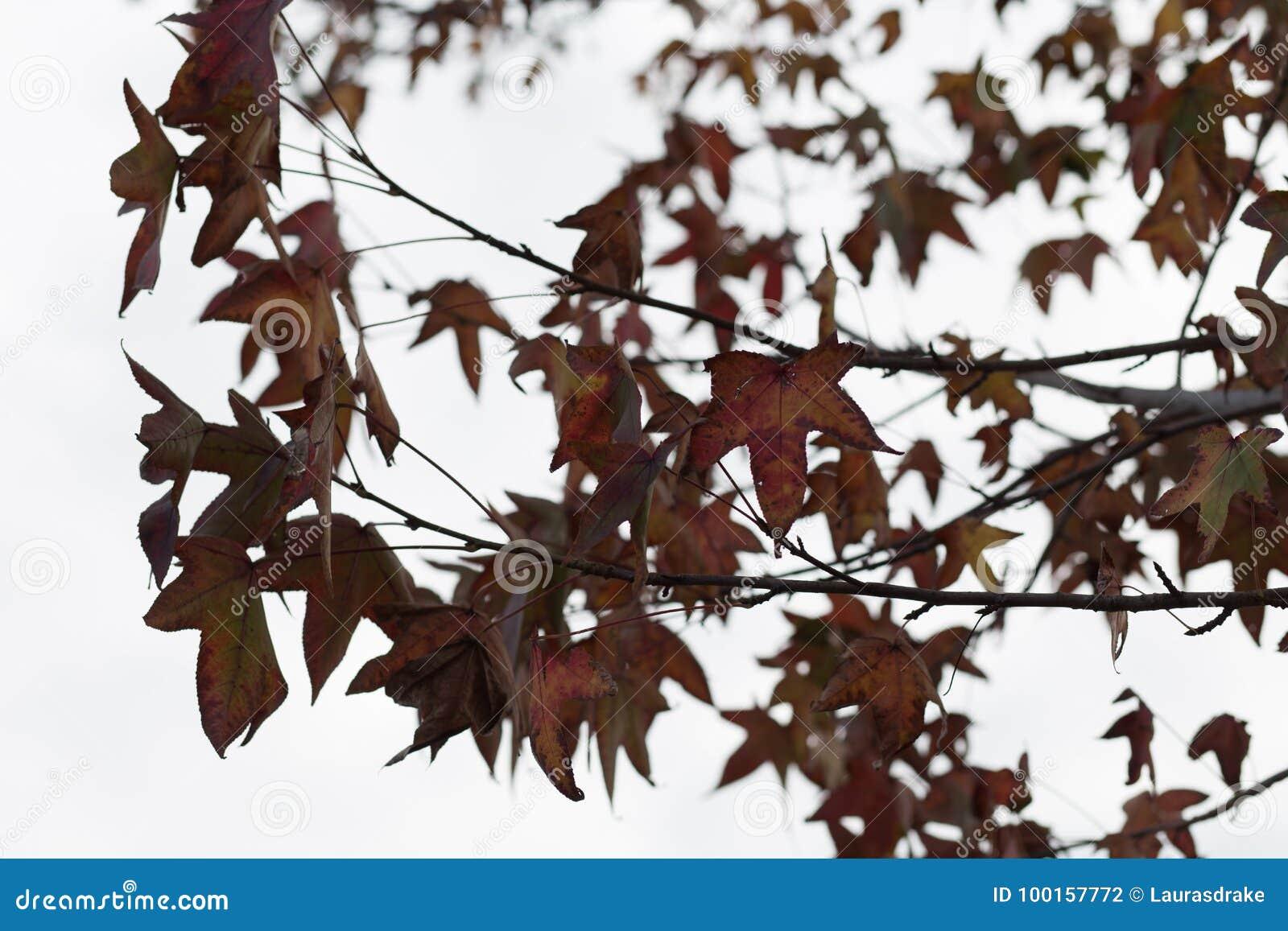 De bladeren van de herfst op boom