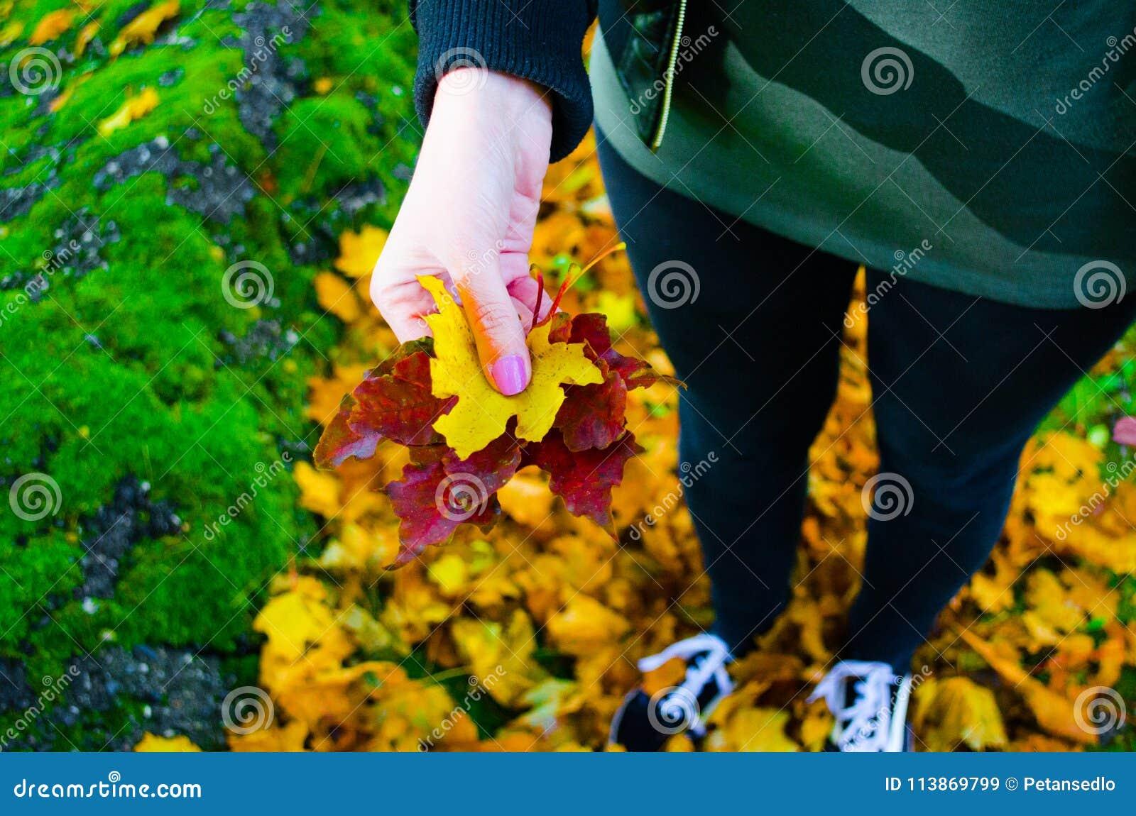 De bladeren van de vrouwenholding, de herfst