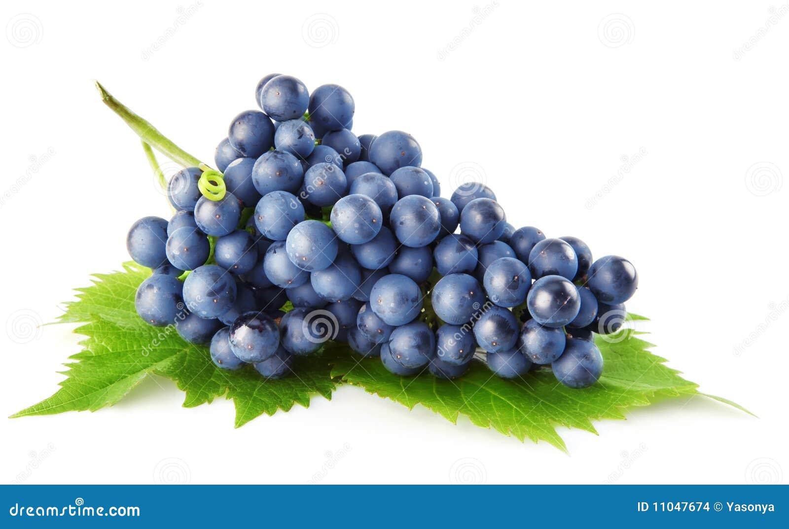 De blauwe druif met groene bladeren isoleerde fruit