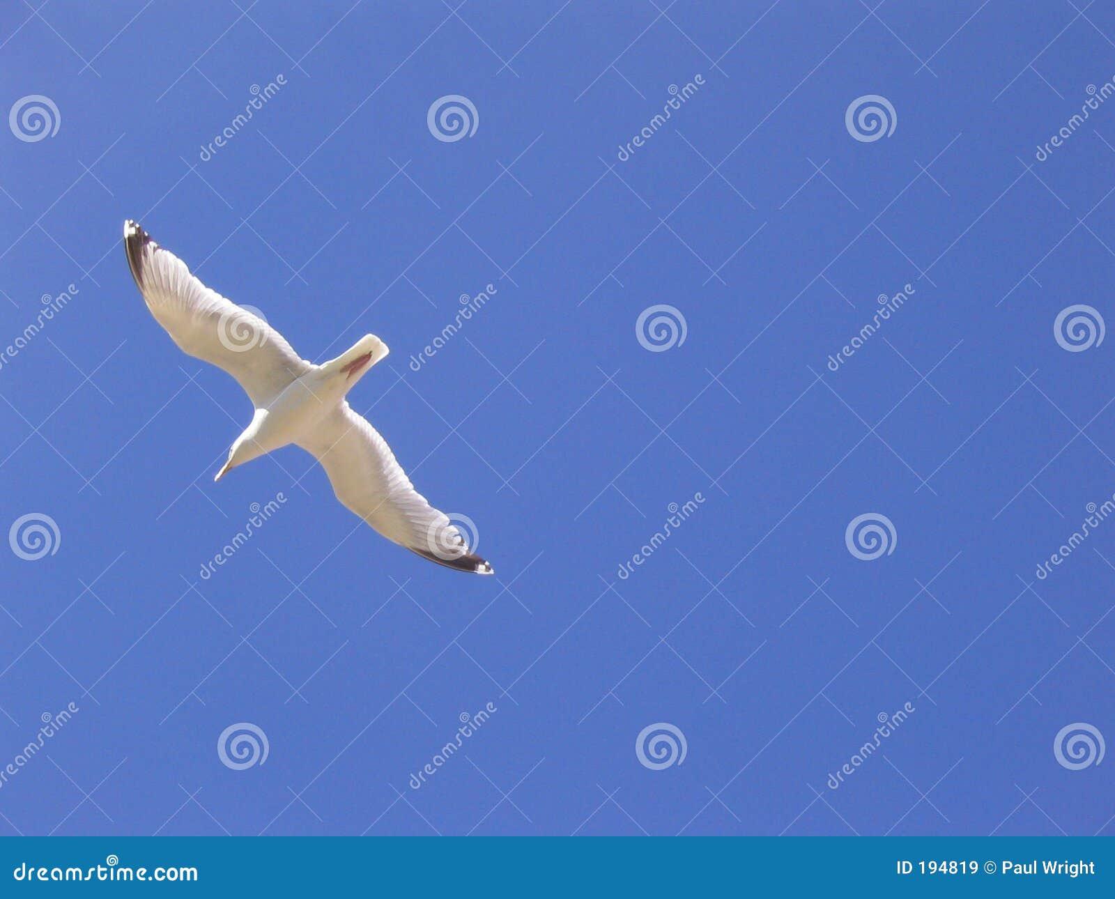 De blauwe hemel van de zeemeeuw
