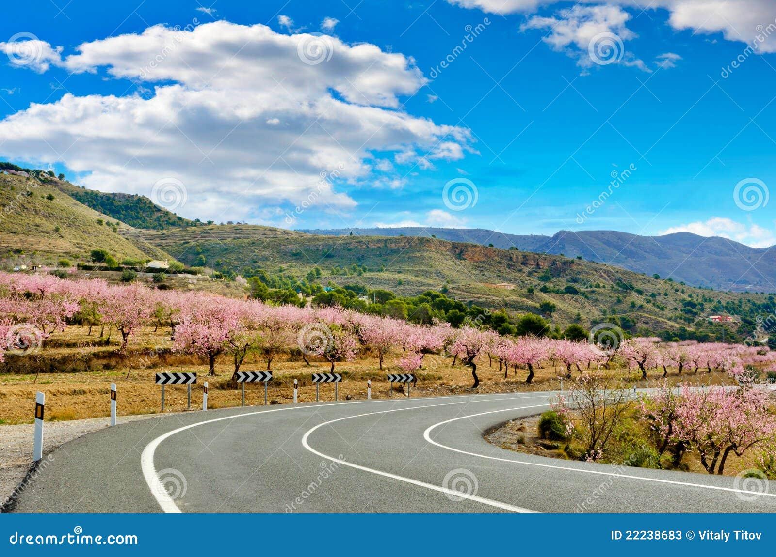De Bloei van de Bomen van de amandel aan beide kanten van een weg, Spanje