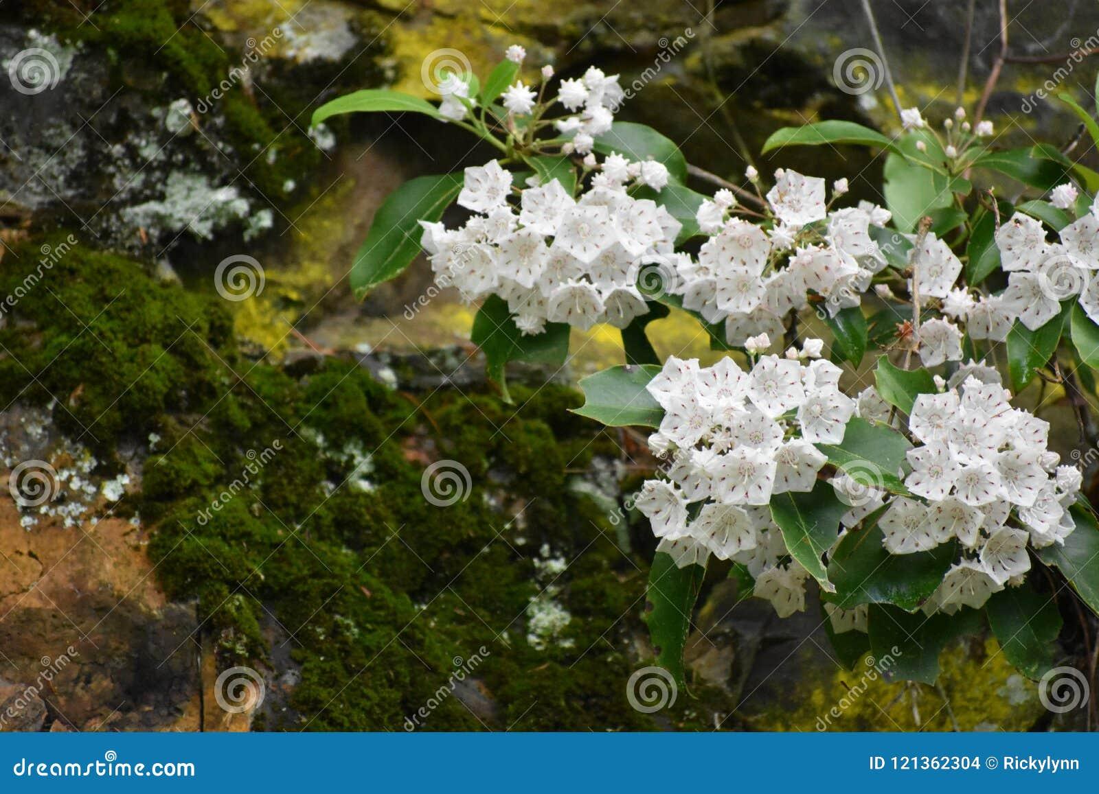De bloeiende Boom dichtbij een mos behandelde Rots in het Rokerige Berg Nationale Park