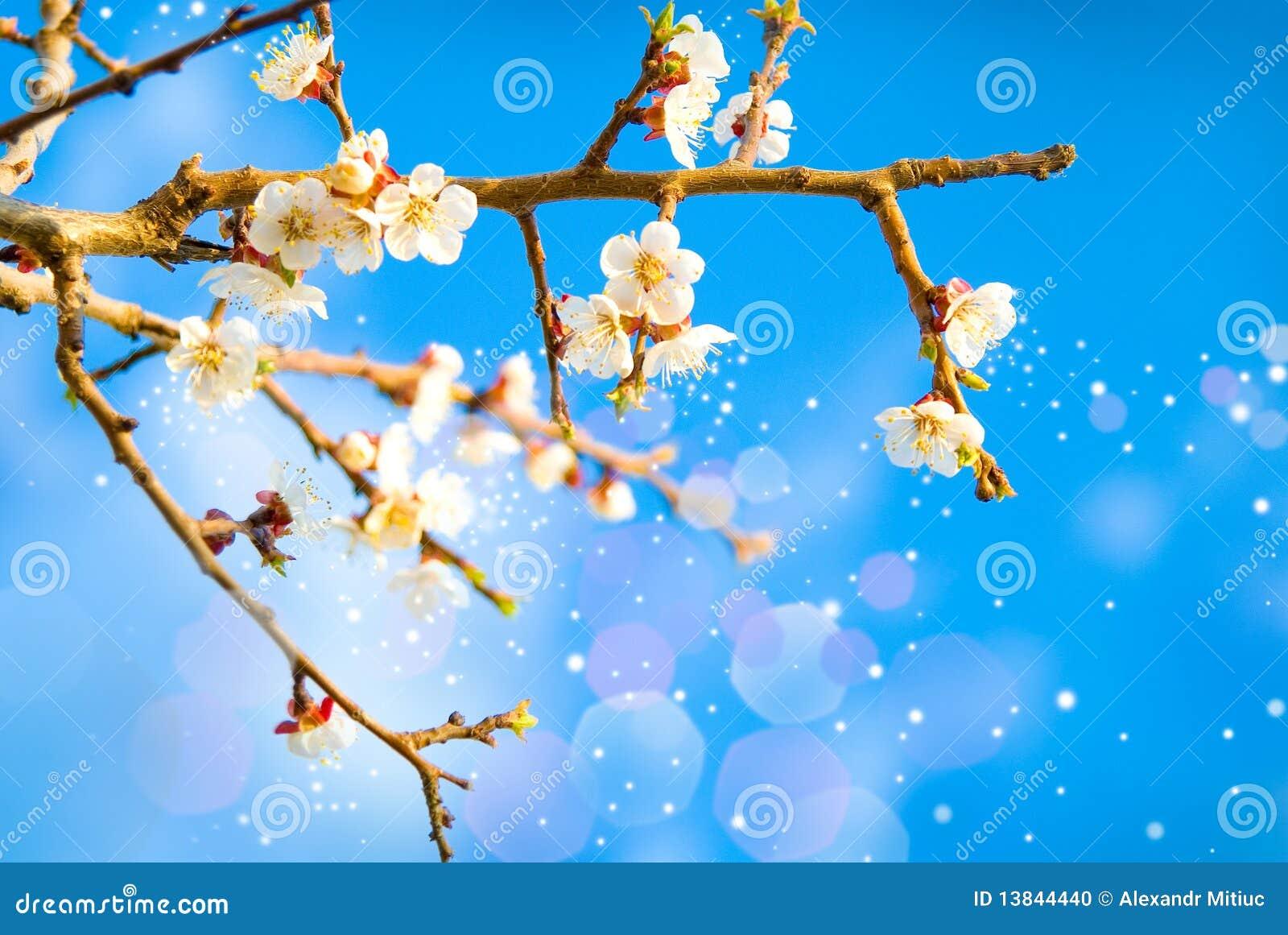 De bloeiende geuren van de lente.
