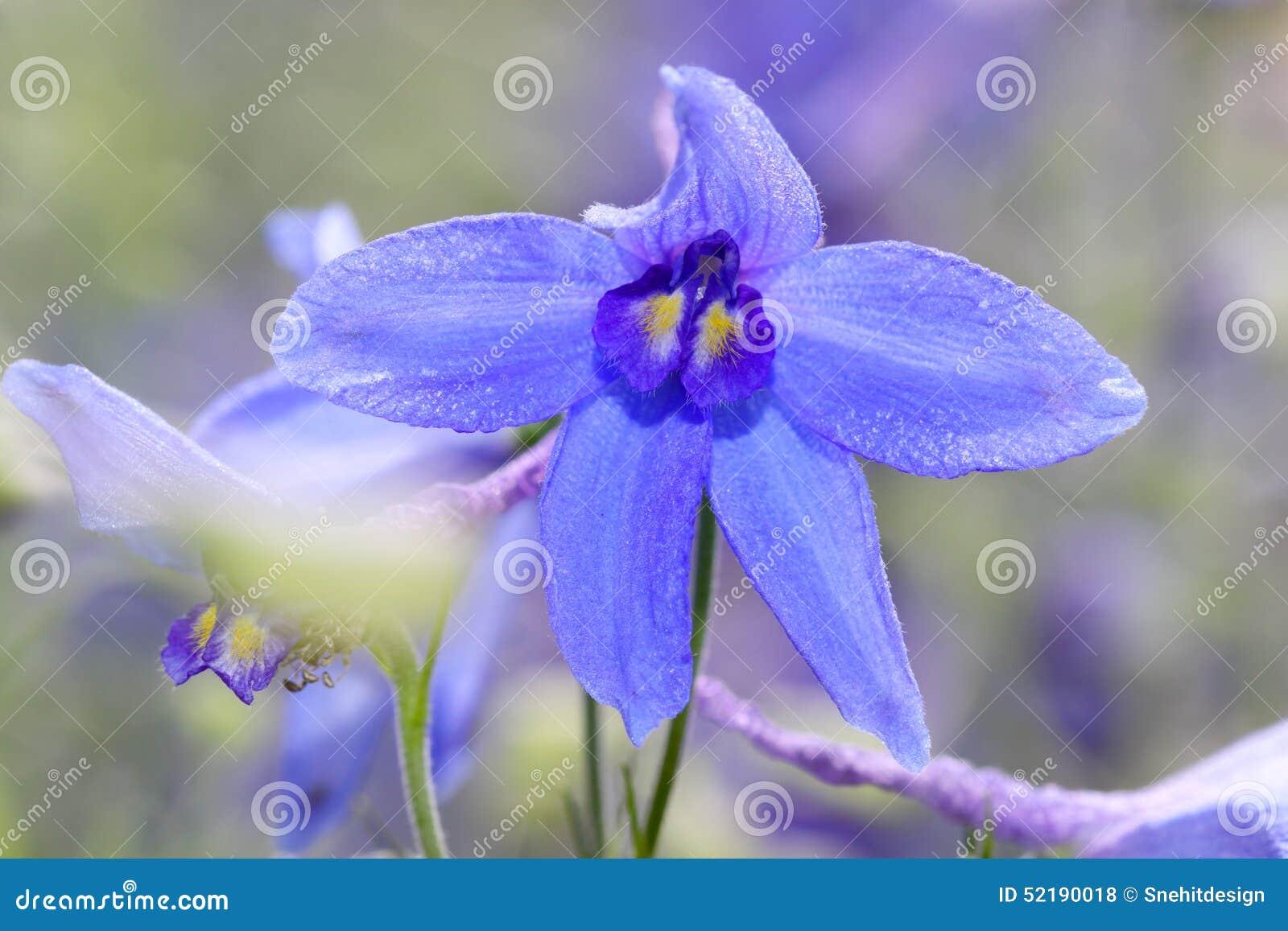 De bloem van de iris