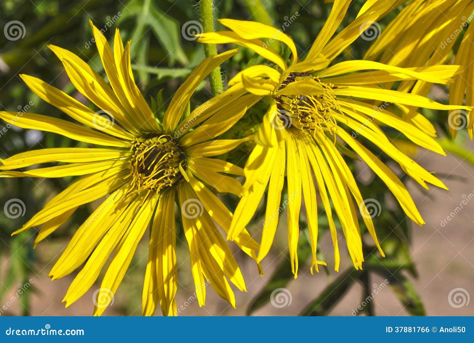 De bloem van de kopinstallatie