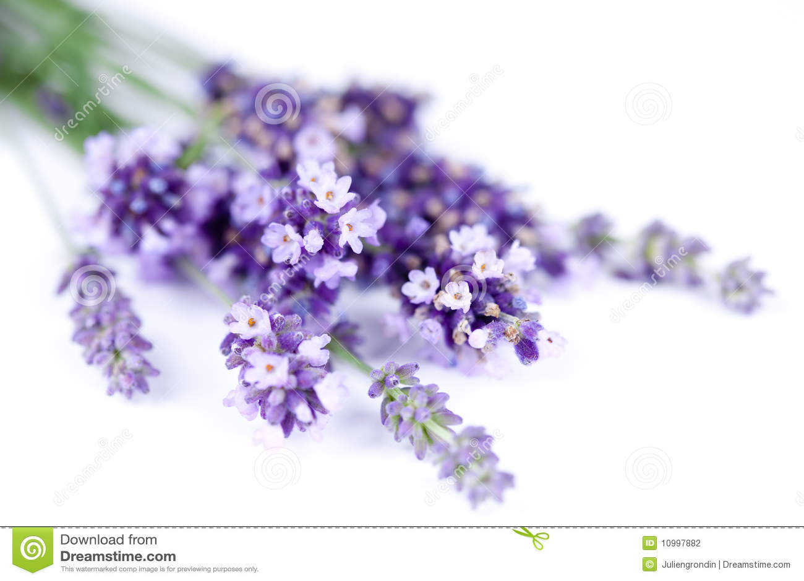De bloem van de lavendel die op wit wordt geïsoleerdj