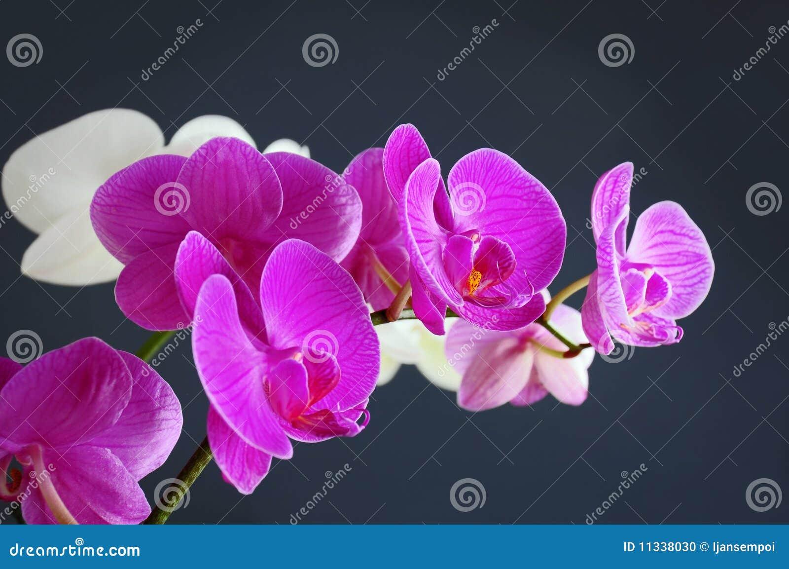 De bloem van de orchidee