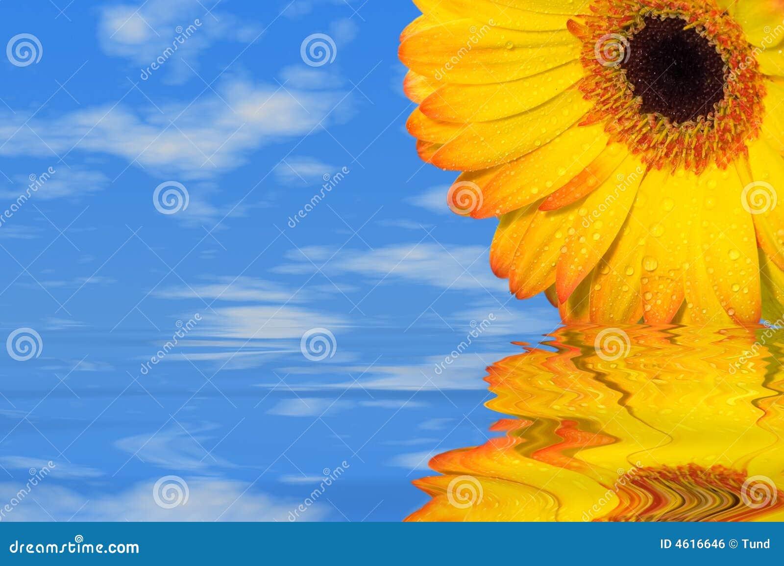 De bloem van de zomer