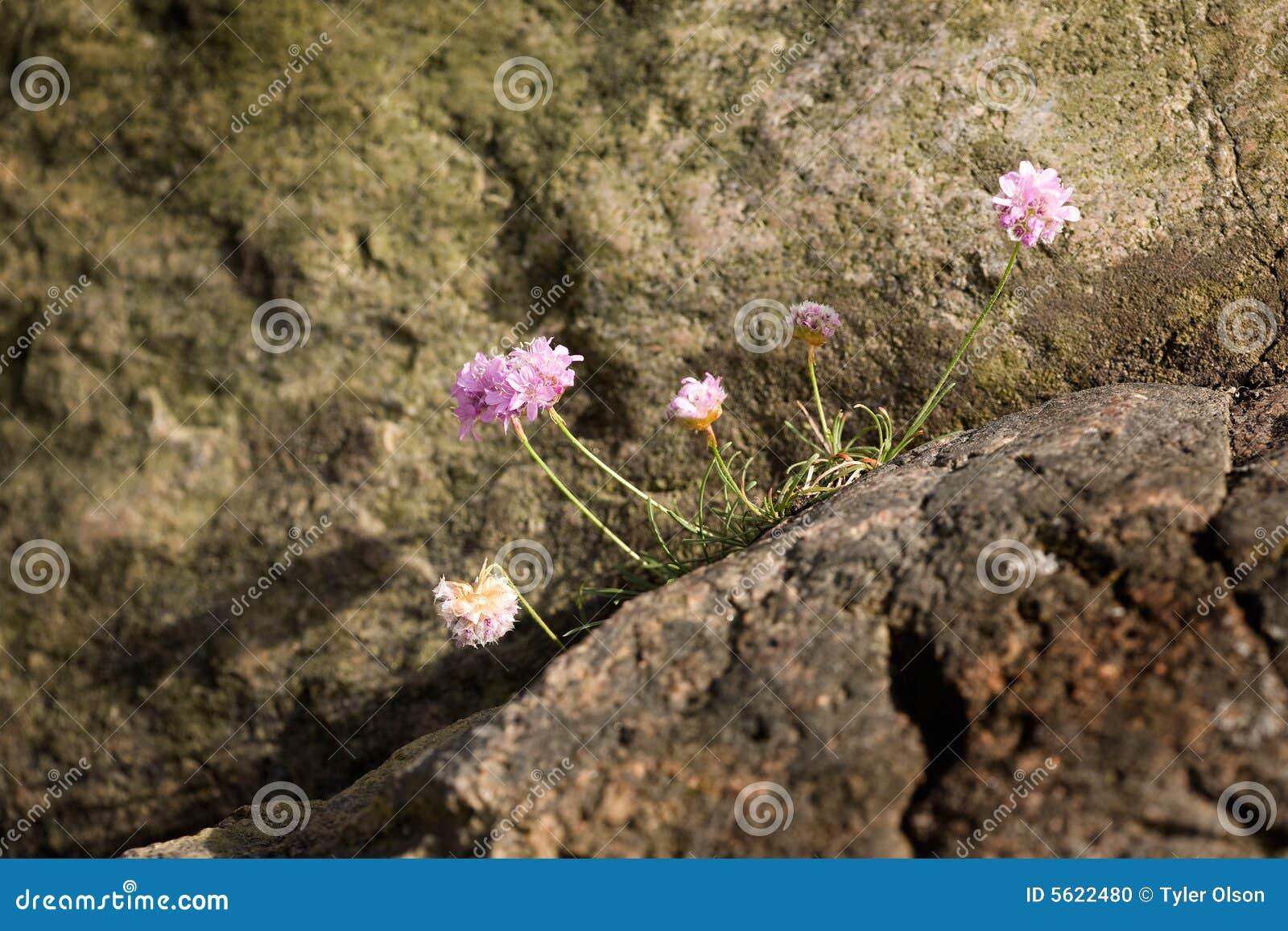 De bloem van de zuinigheid