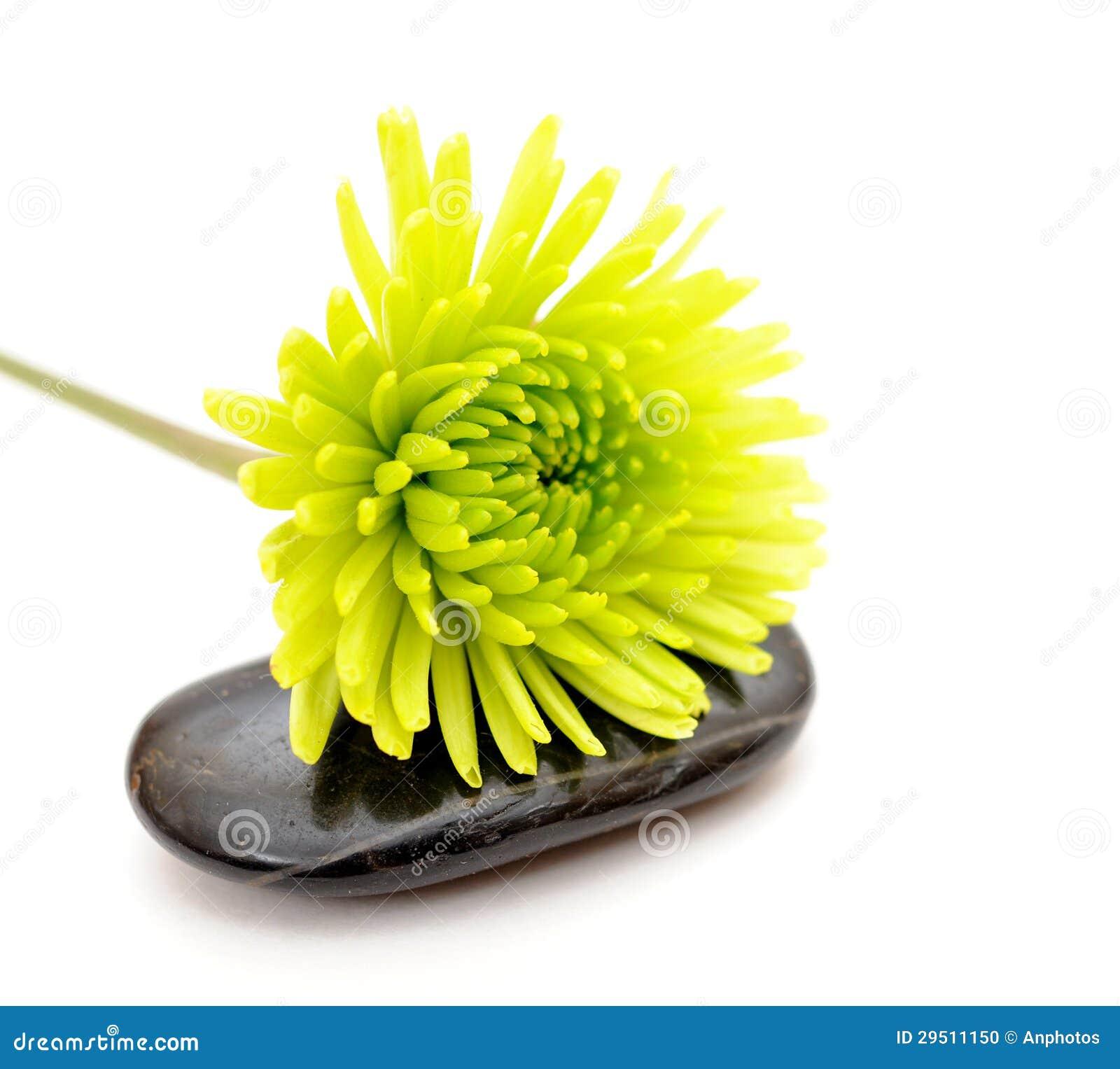 De bloem van Mum
