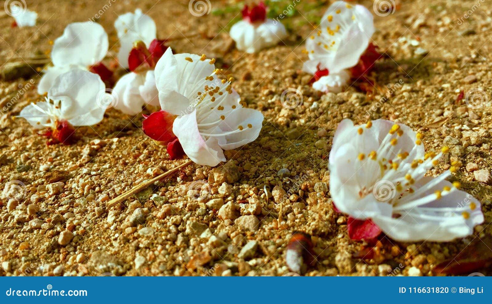 De bloemen in de lente
