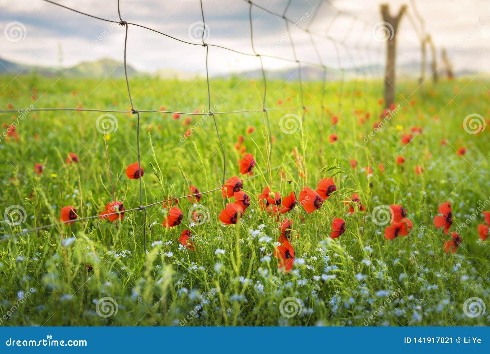 De bloemen op de gebieden