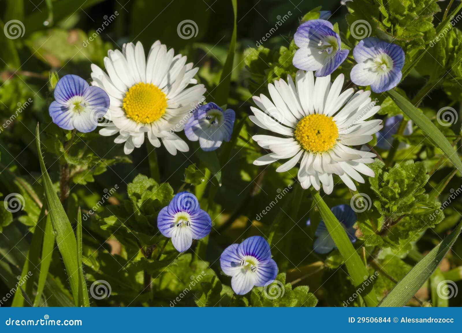 De bloemen van Daisy en van Veronica