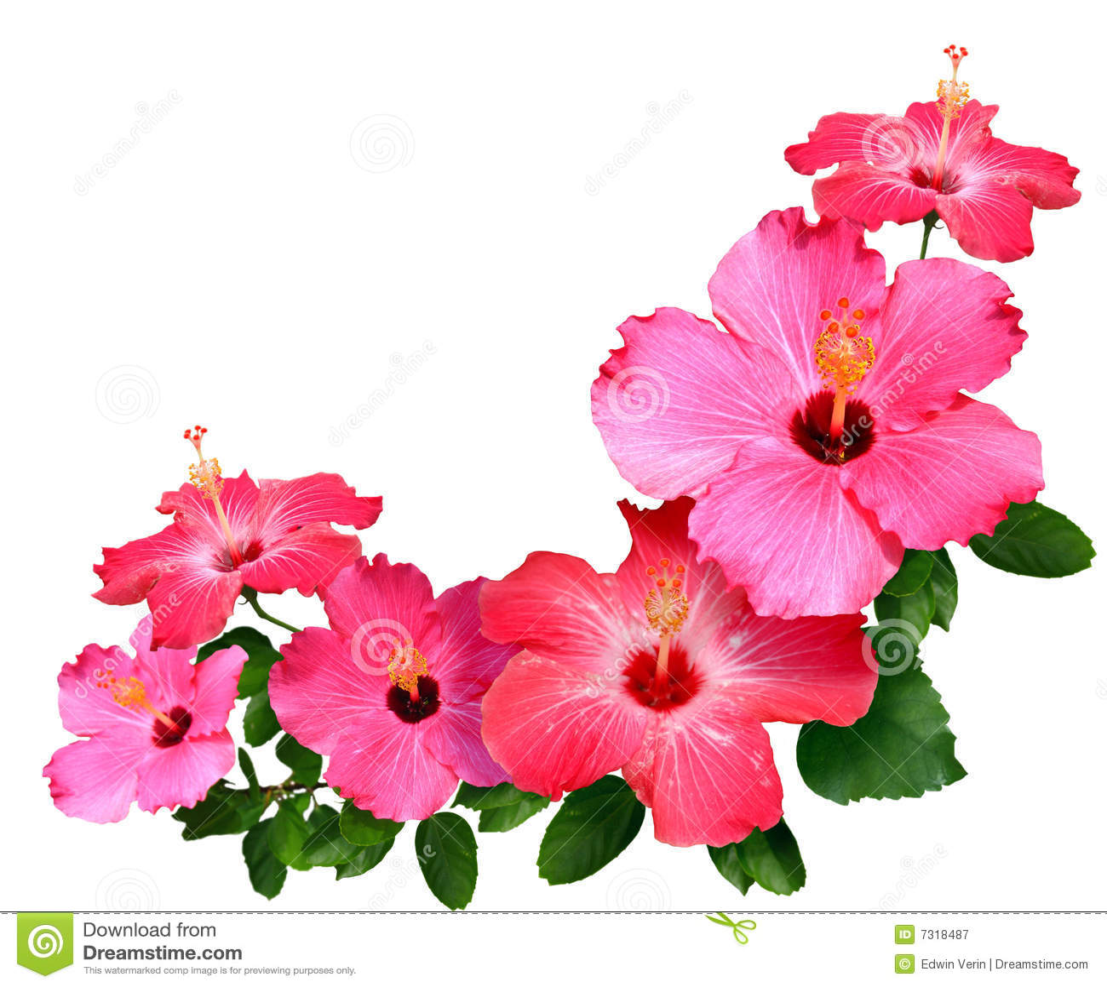 Red Hawaiian Flowers Background Flowerspad Flower