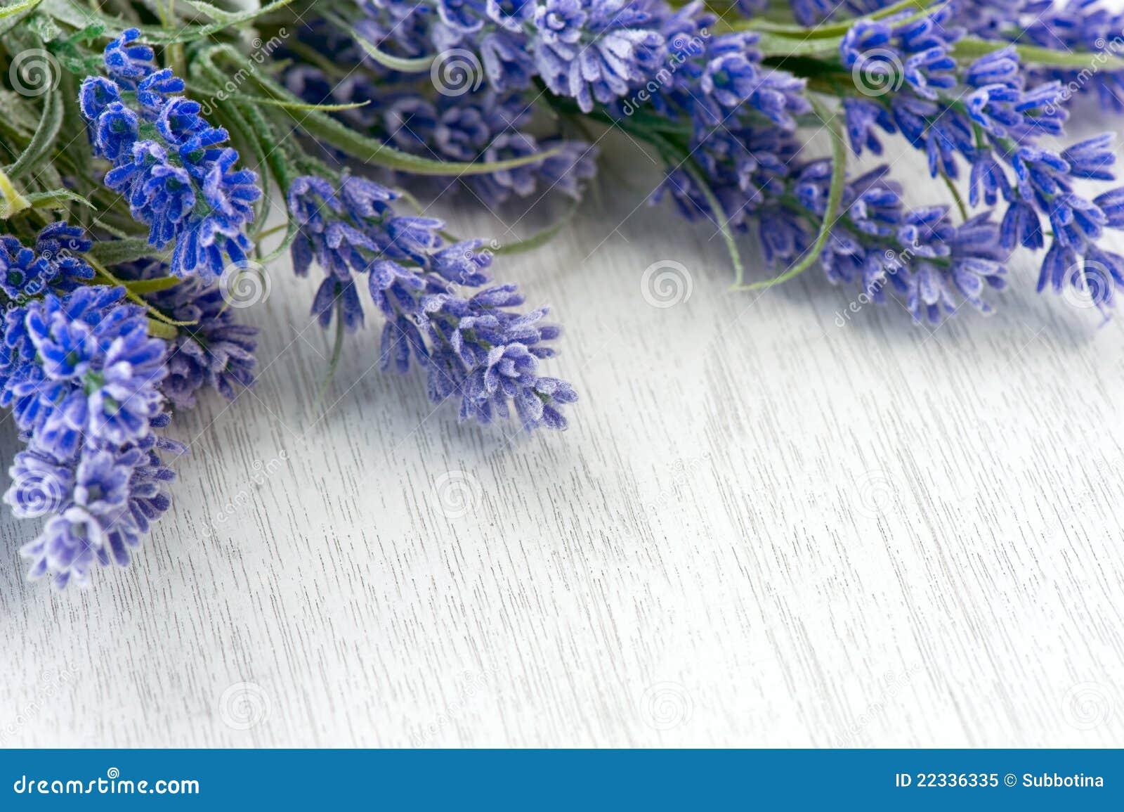 De bloemen van de lavendel