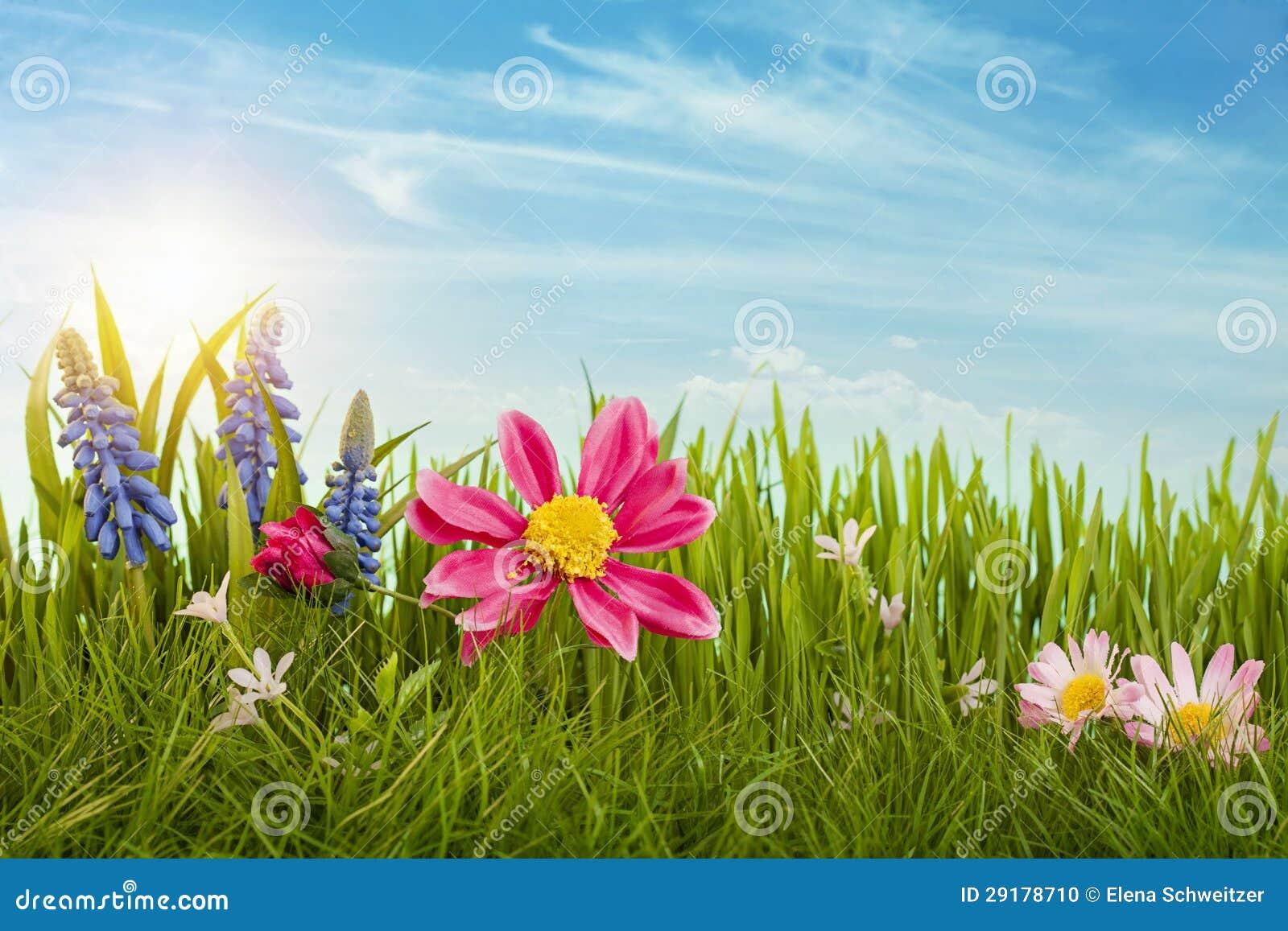 De Bloemen Van De Lente Stock Foto   Afbeelding  29178710