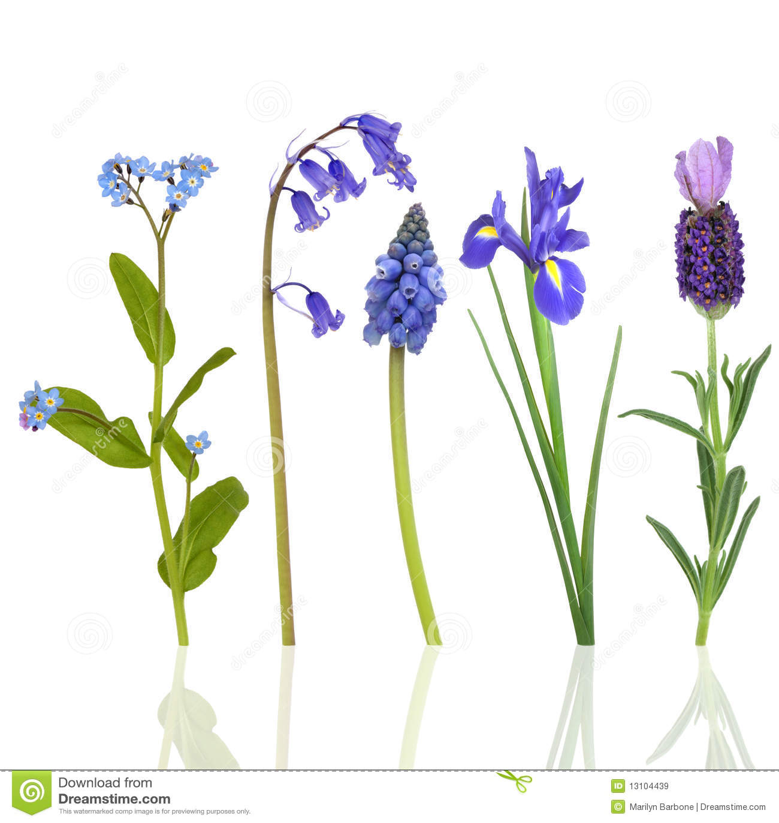 De Bloemen van de lente in Blauw