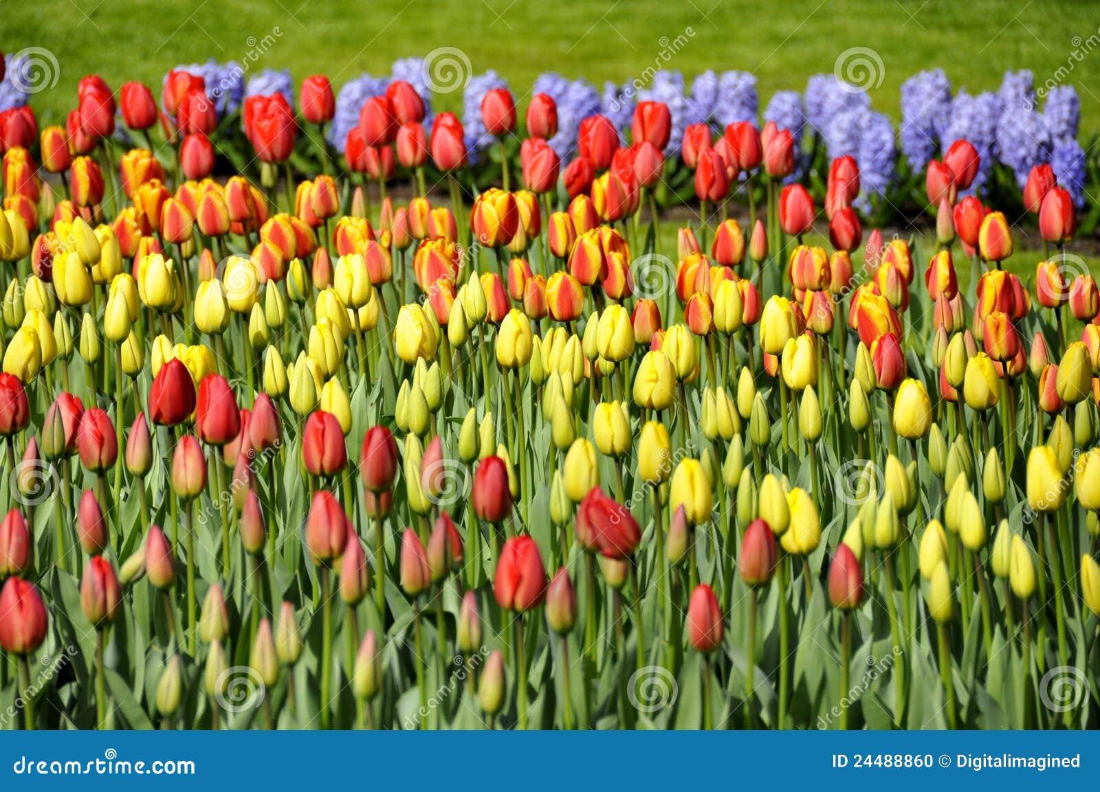De Bloemen Van De Lente In Verschillende Kleuren Stock Foto   Afbeelding  24488860