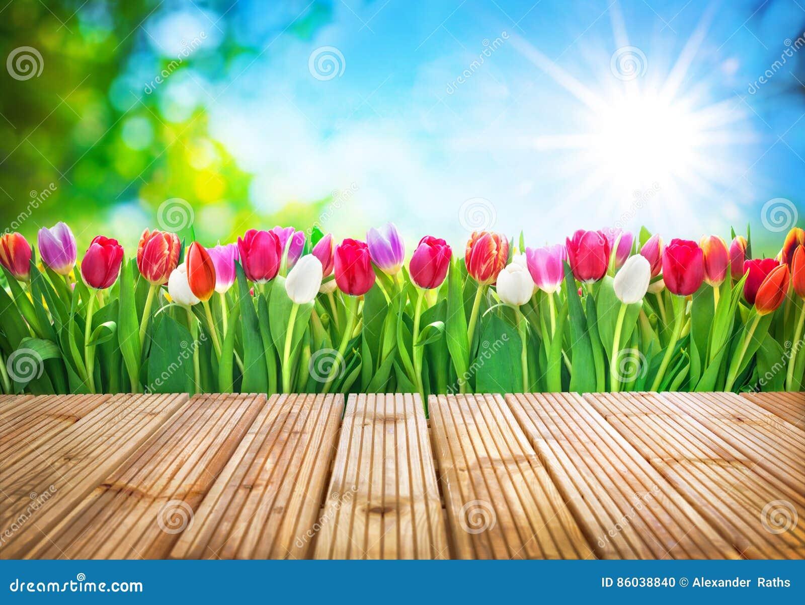 De bloemen van de lentetulpen