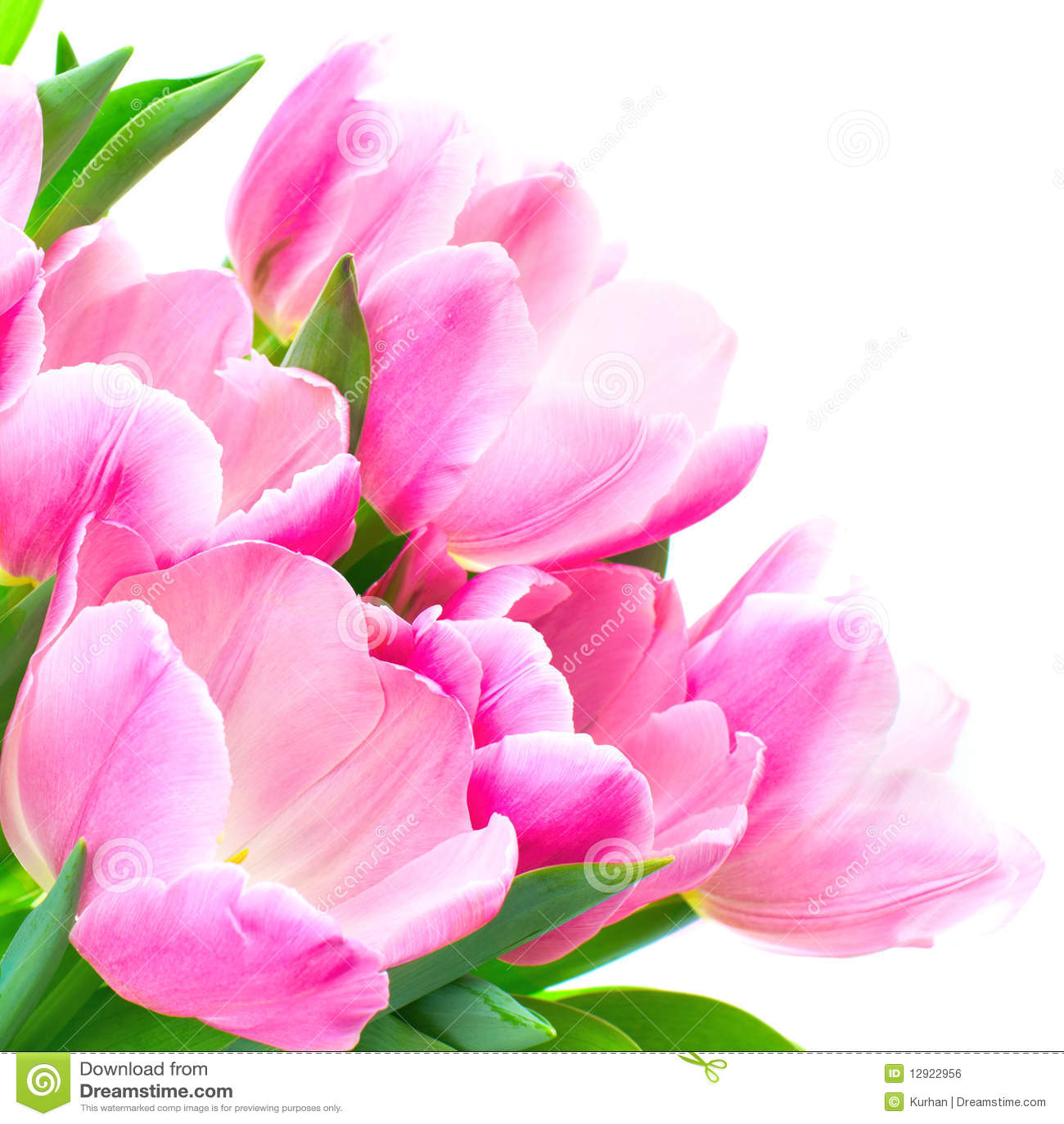 De bloemen van de tulp