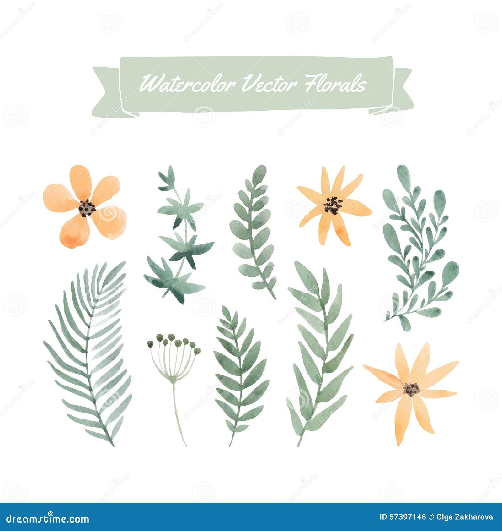 De bloemen van de waterverf