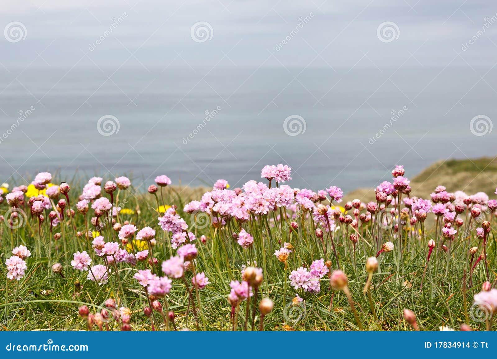 De bloemen van de zuinigheid