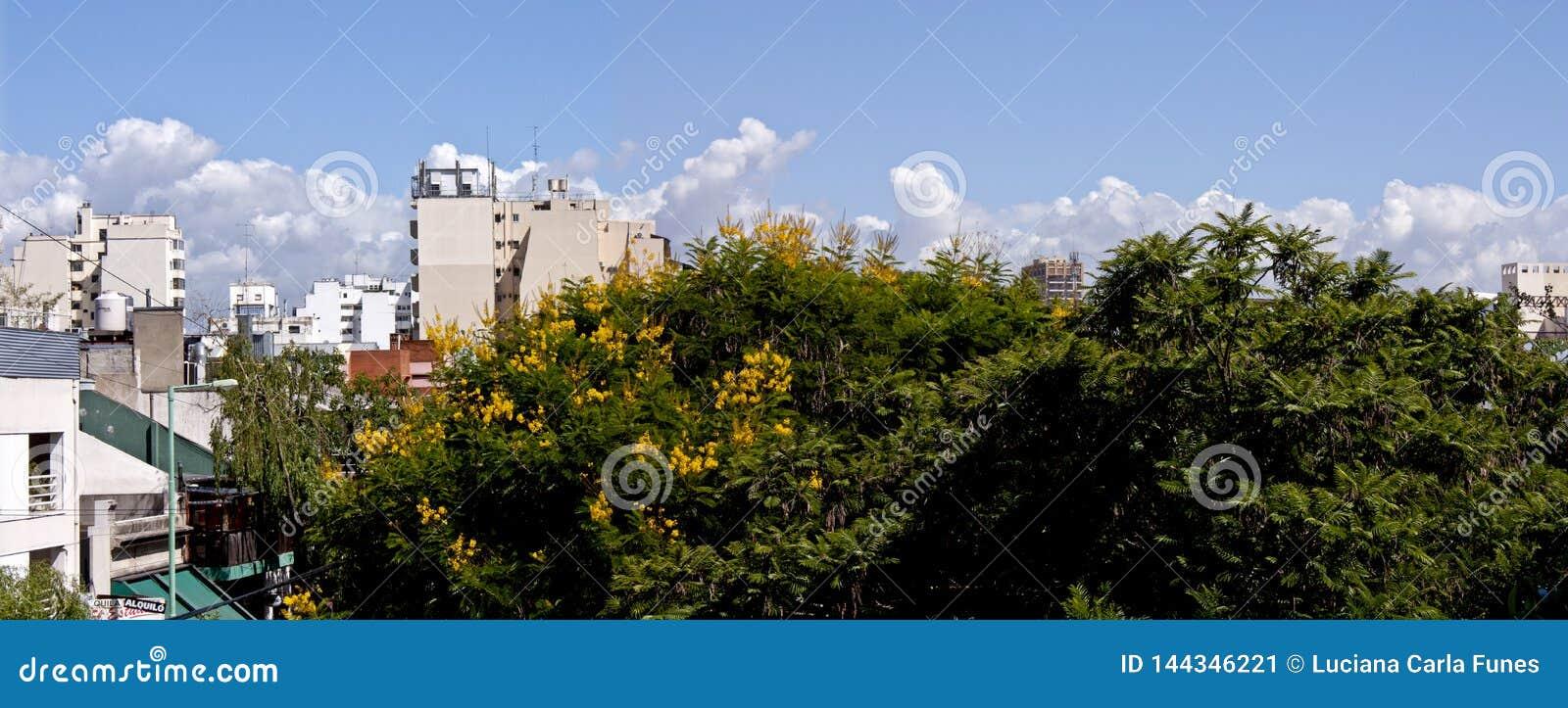 De bloemen van het Ibirapitabroodje in een luchtpanorama van de stadshemel van Buenos aires