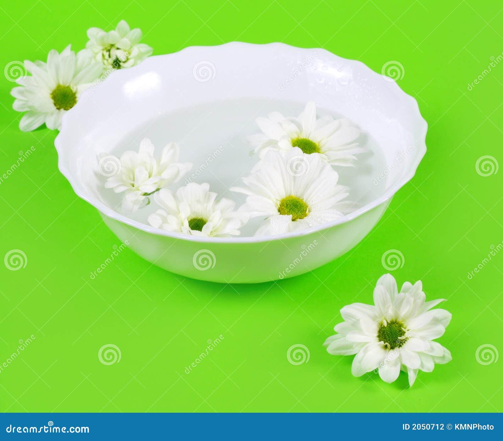 De Bloemen van het water en van de Lente