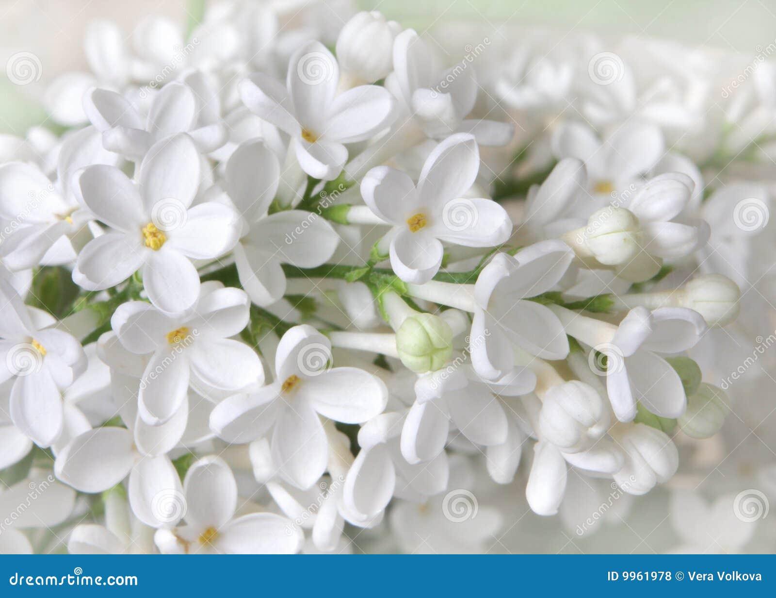 De bloemen van Liliac