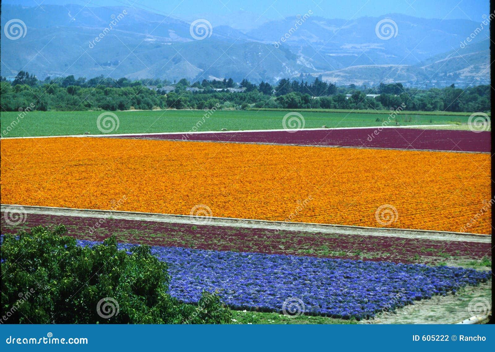 De bloemen van Lompoc