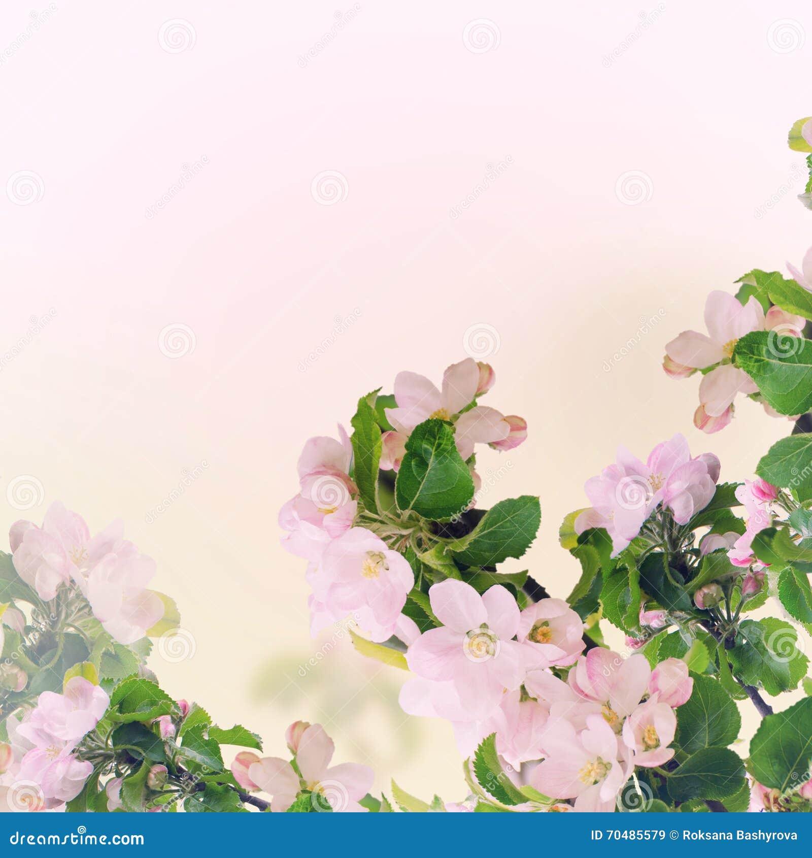 De bloemenachtergrond van Apple