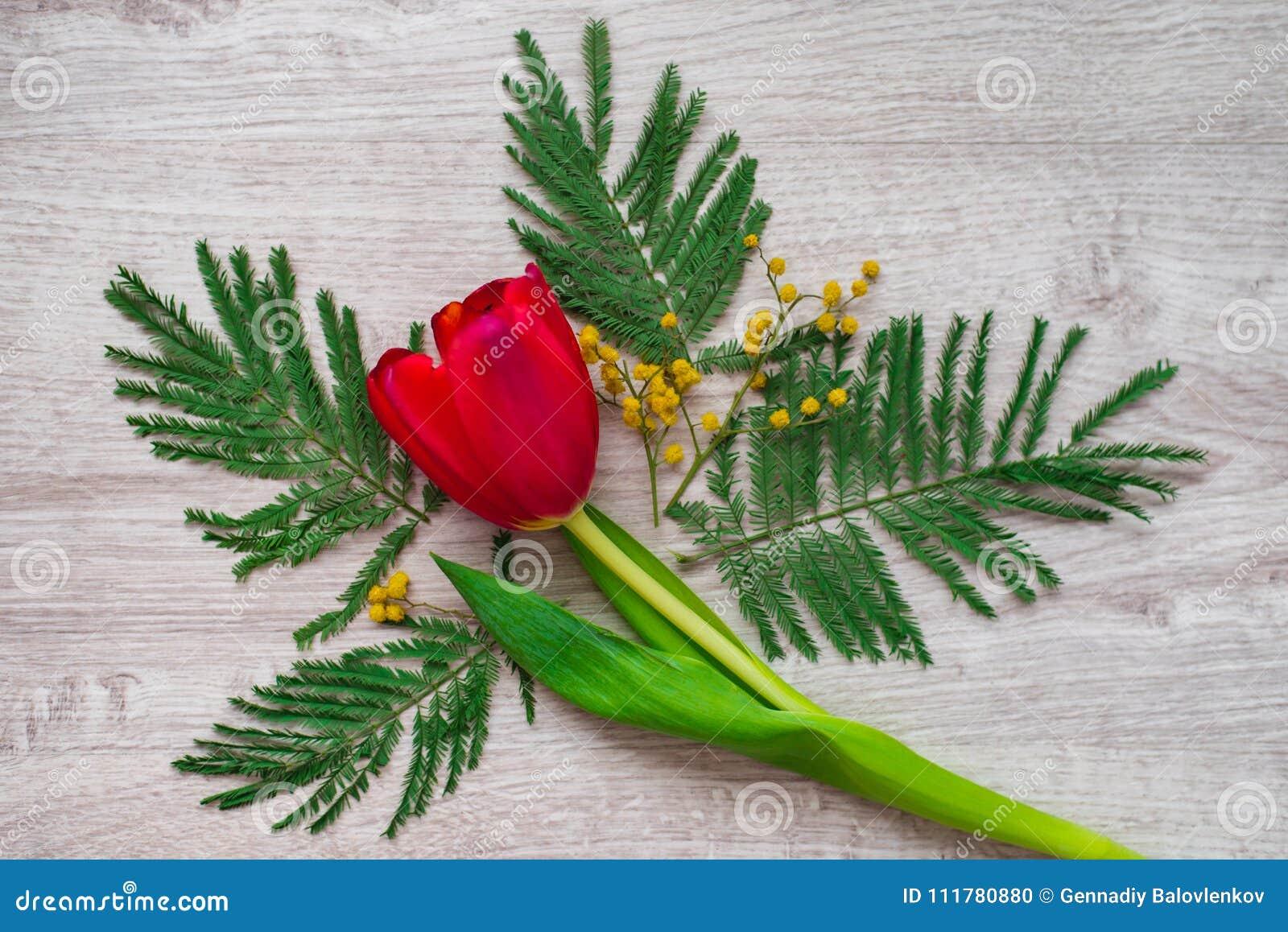De bloemsamenstelling van het stilleven maakte de bloemen decoratieve ontwerp van mimosa s op een houten achtergrond
