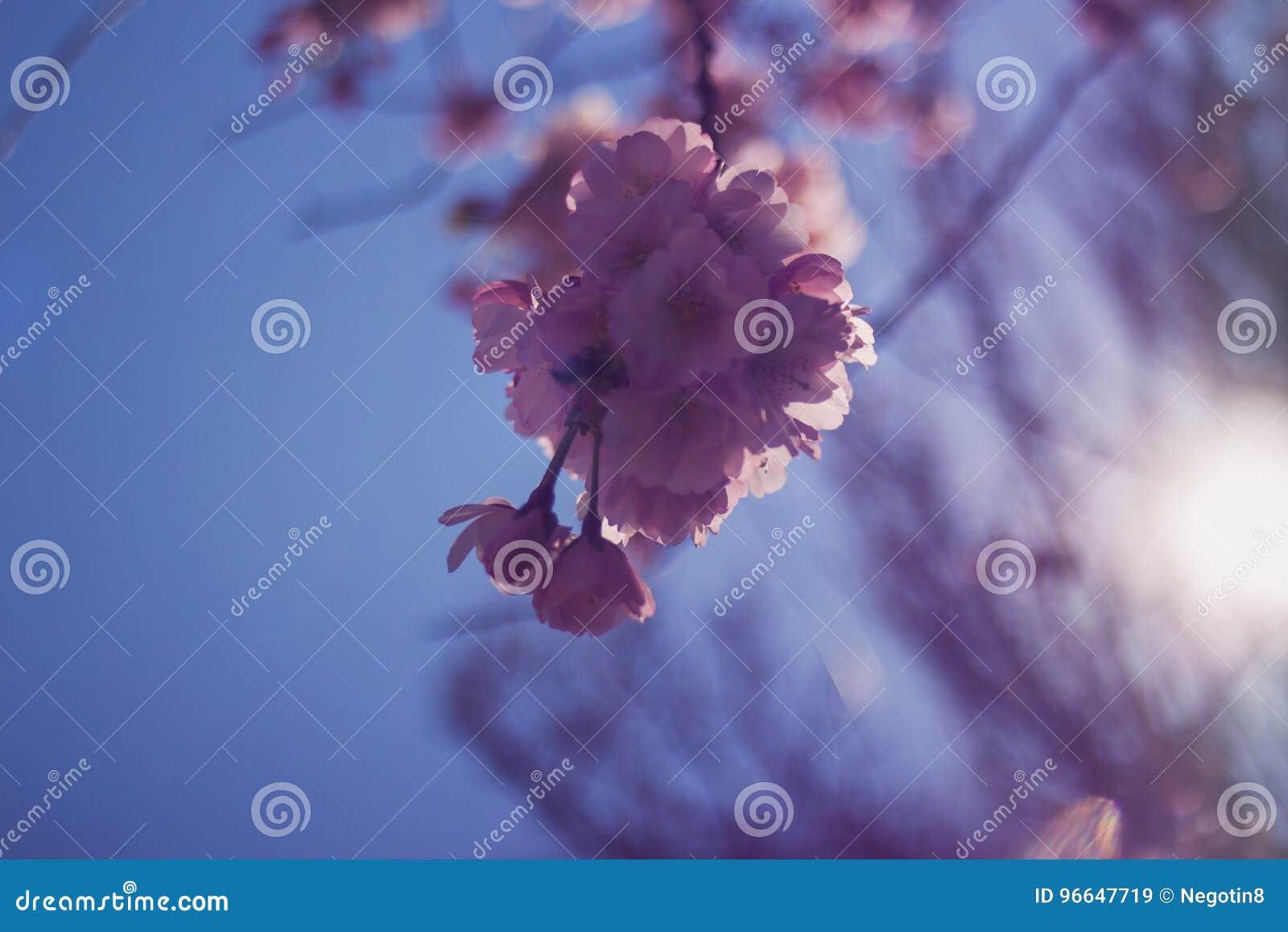 De Bloesem van de lente