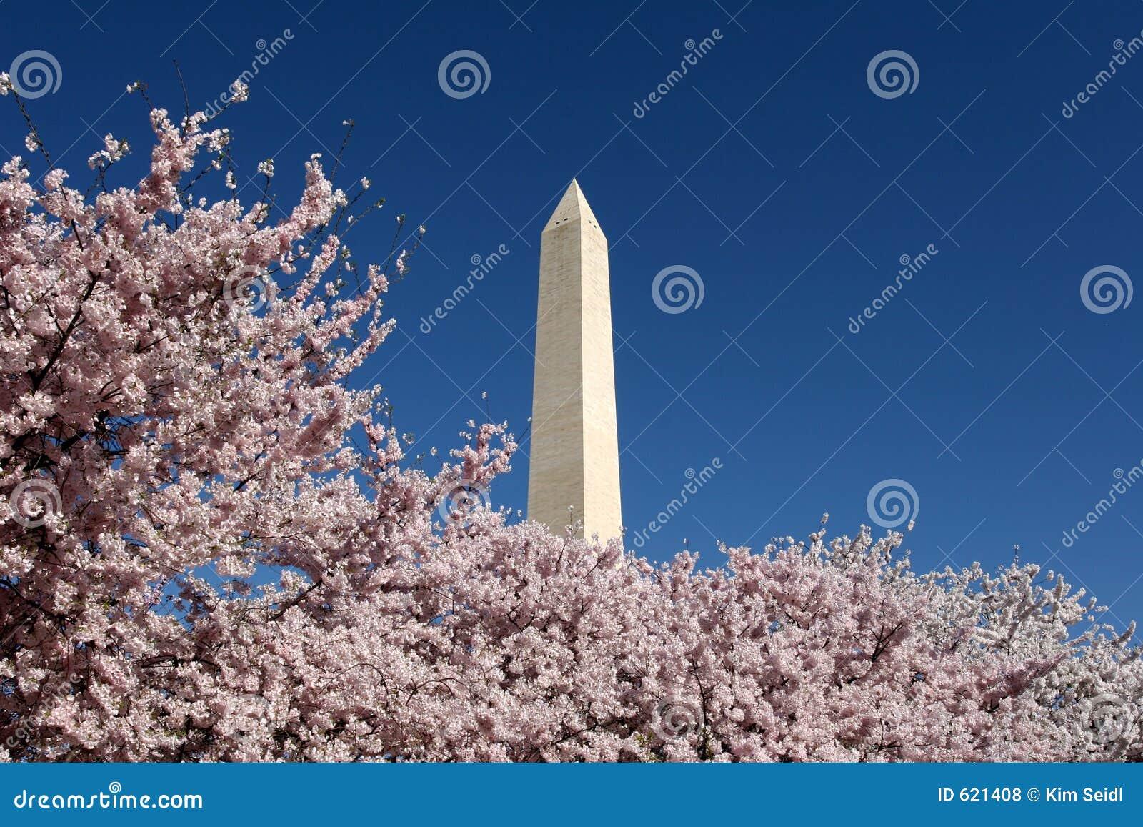 De Bloesems van het Monument van Washington