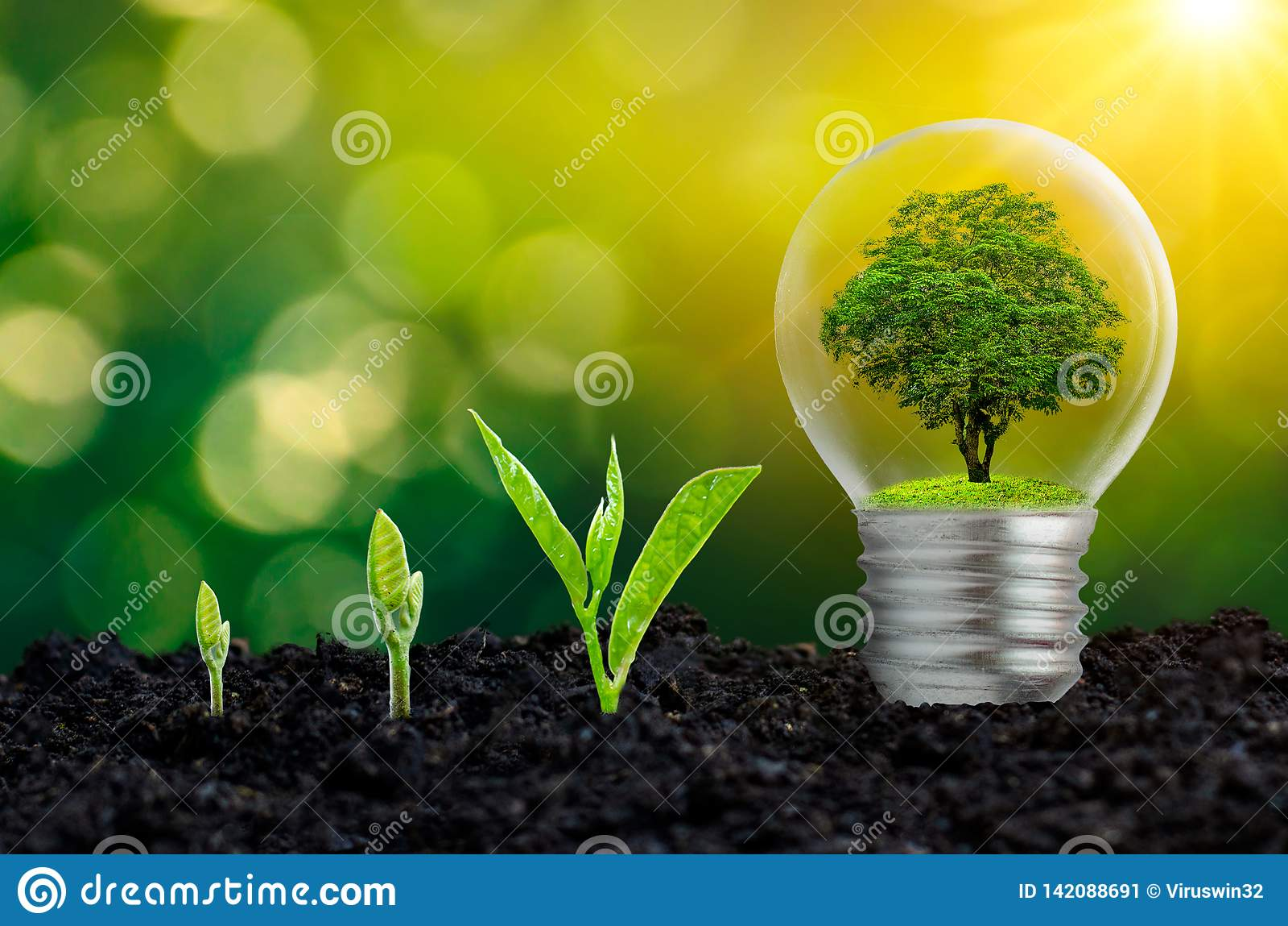 De bol wordt gevestigd op de binnenkant met bladerenbos en de bomen zijn in het licht Concepten milieubehoud en