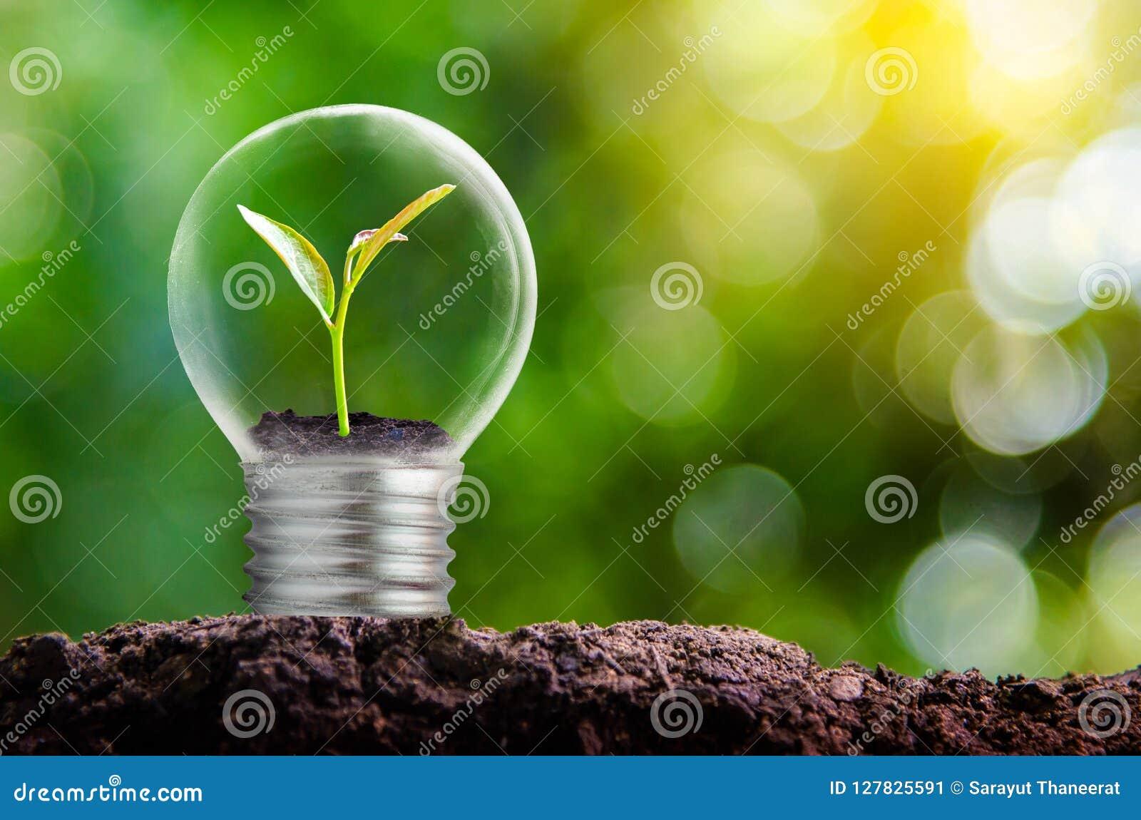 De bol wordt gevestigd op de binnenkant met bladerenbos en de bomen zijn in het licht Concepten milieubehoud en gl