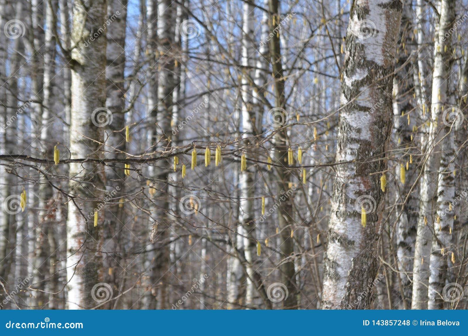 De bomen hebben hun eigen decoratie