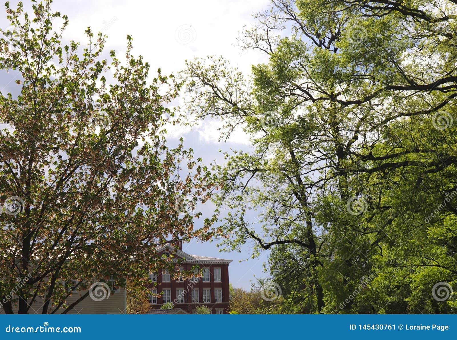 De bomen overheersen het Brouwen Onweershemel met het Inbouwen van Achtergrond
