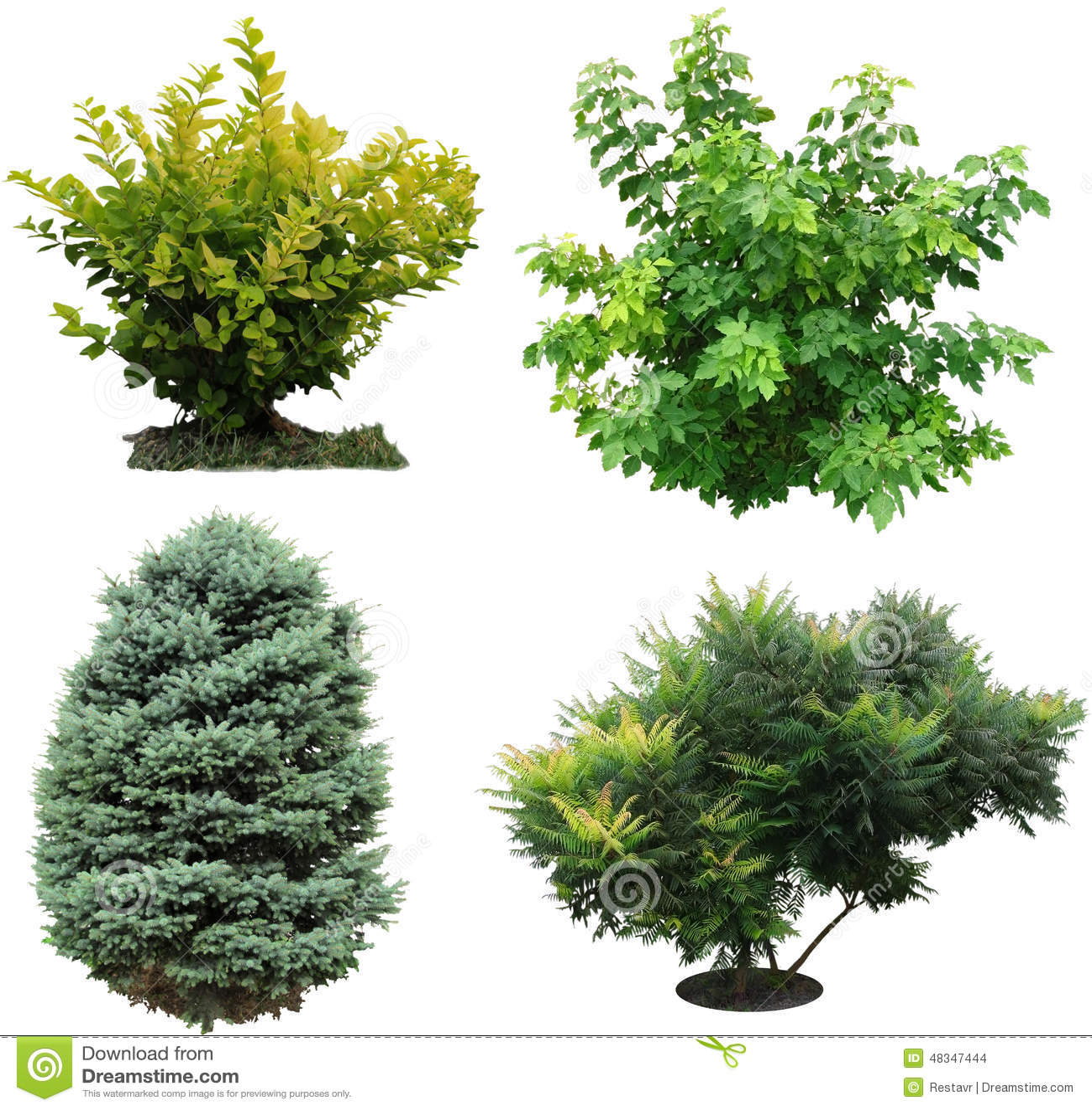 De bomen, struiken izolated