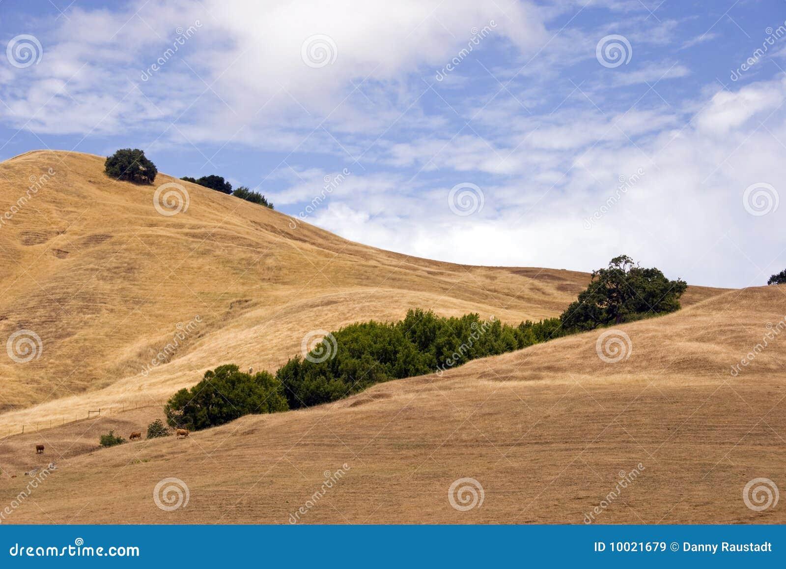 De Bomen van Californië van de Vallei van Sonoma