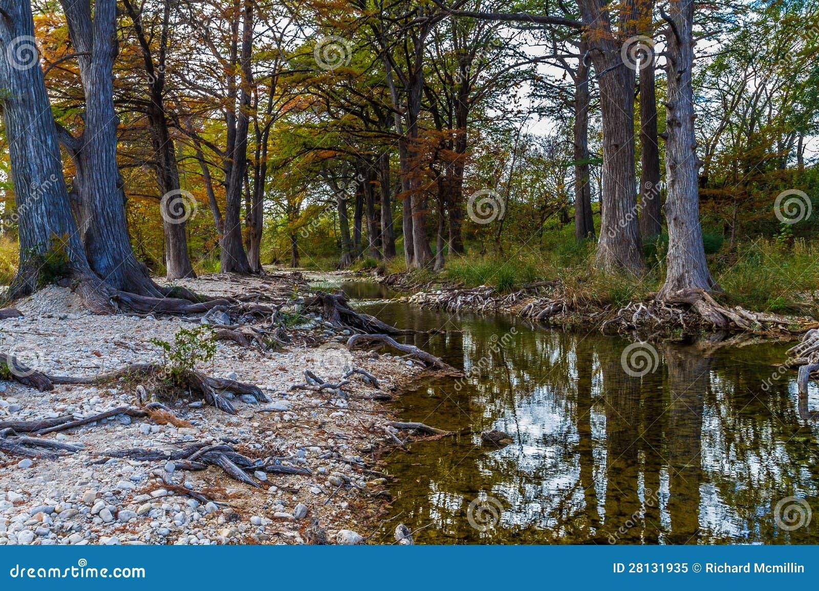 De Bomen van Cyprus op de Kreek van het Land van de Heuvel van Texas