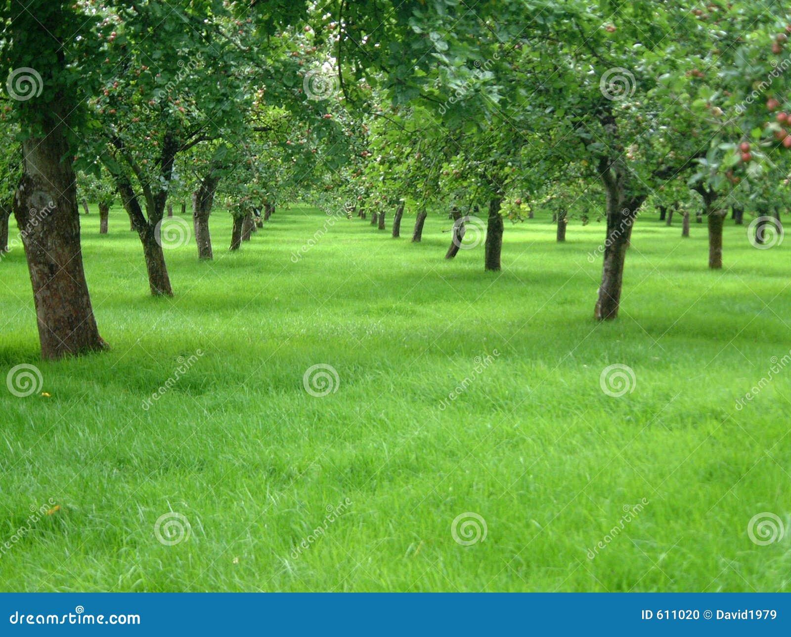 De Bomen van de appel