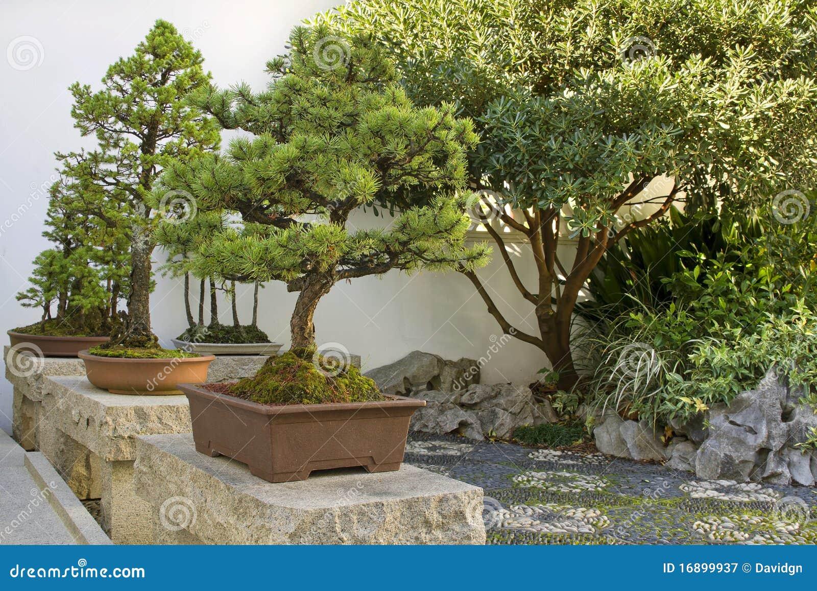 De bomen van de bonsai in chinese tuin stock afbeelding afbeelding 16899937 - Deco van de tuin ...