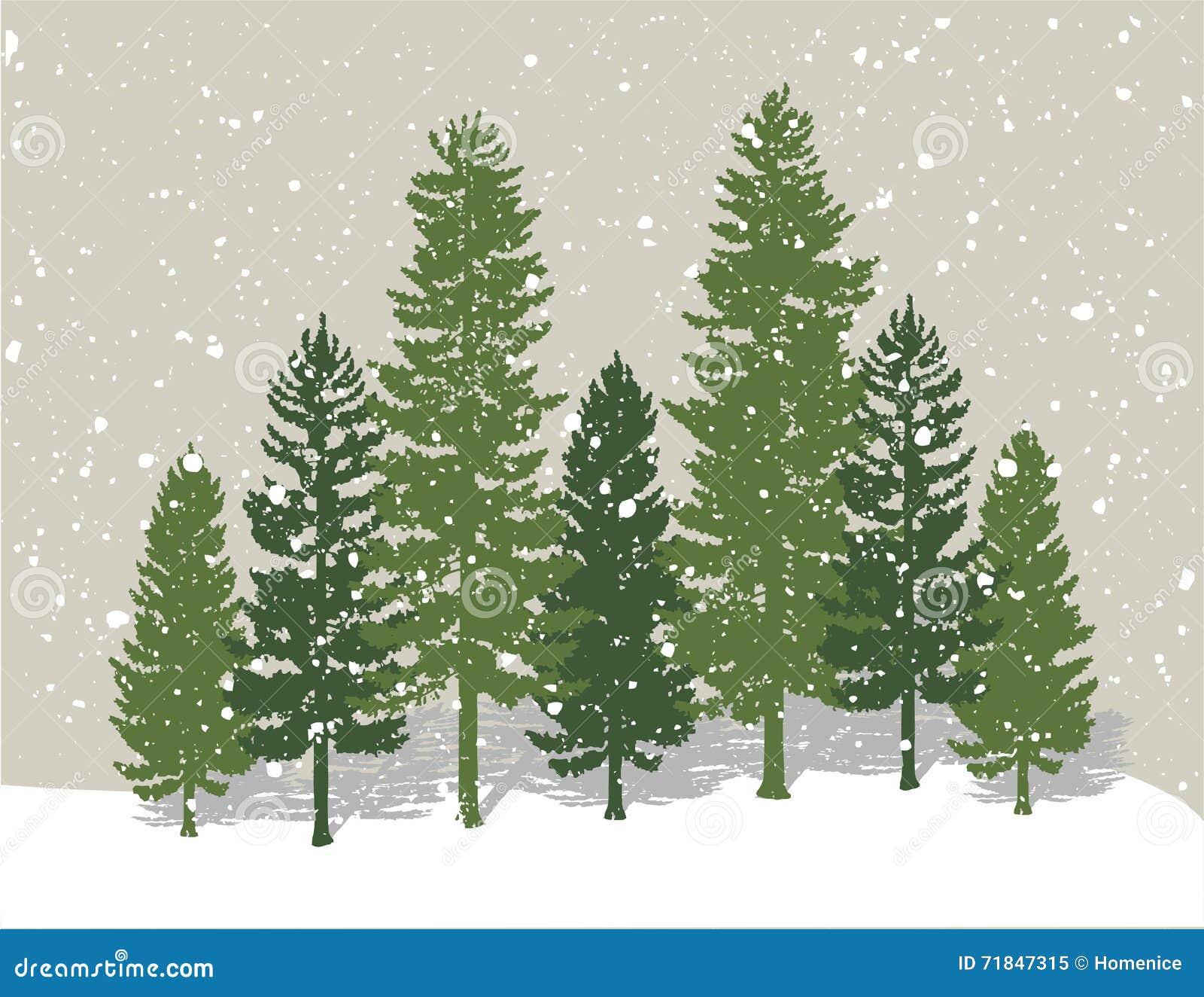 De bomen van de de winterpijnboom