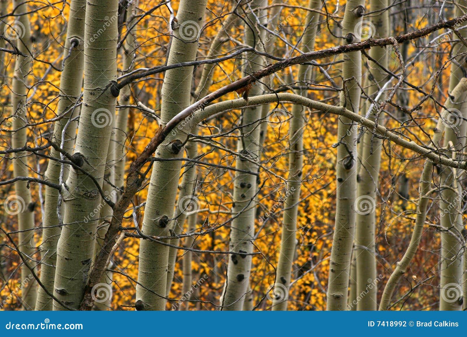 De bomen van de esp