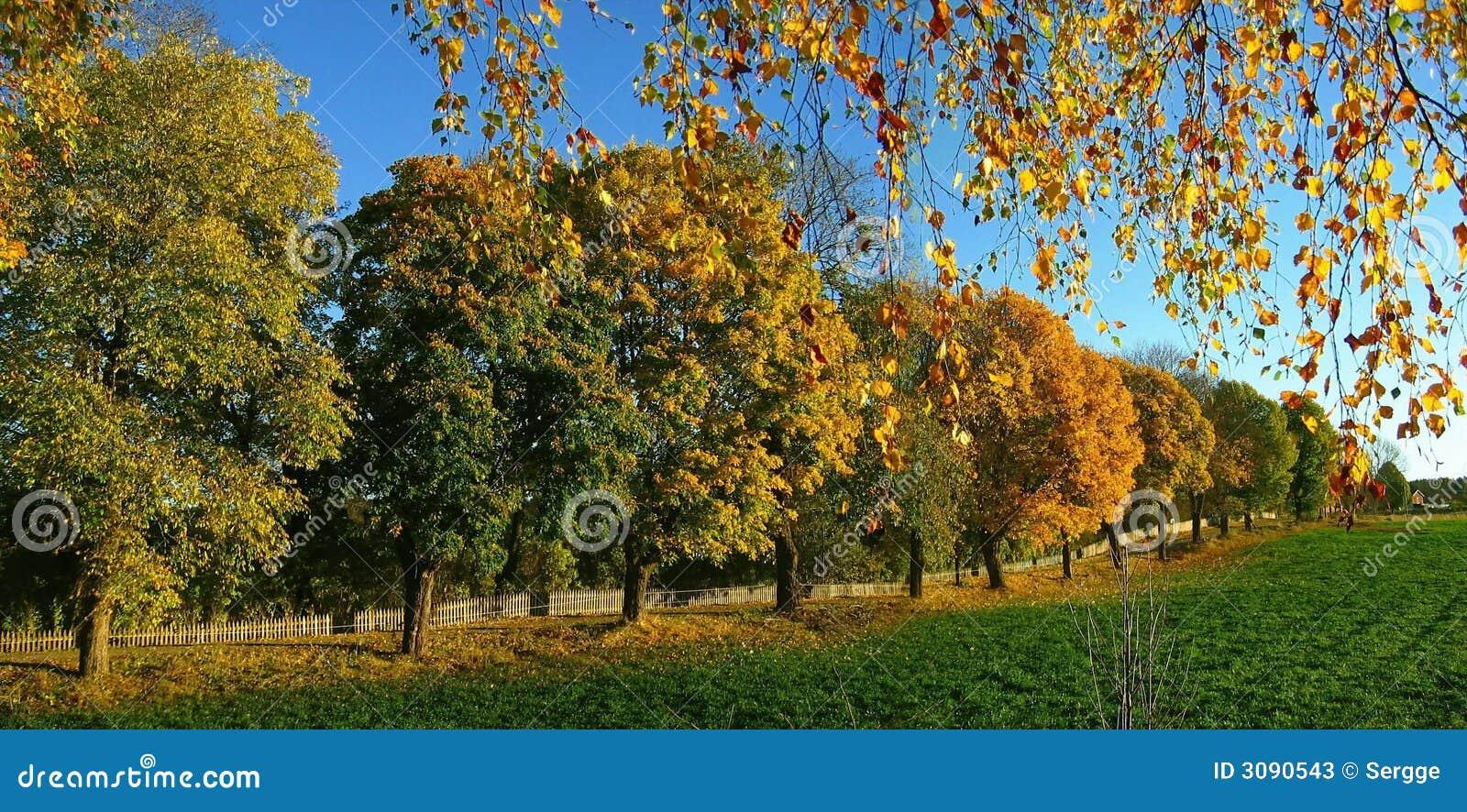 De bomen van de herfst