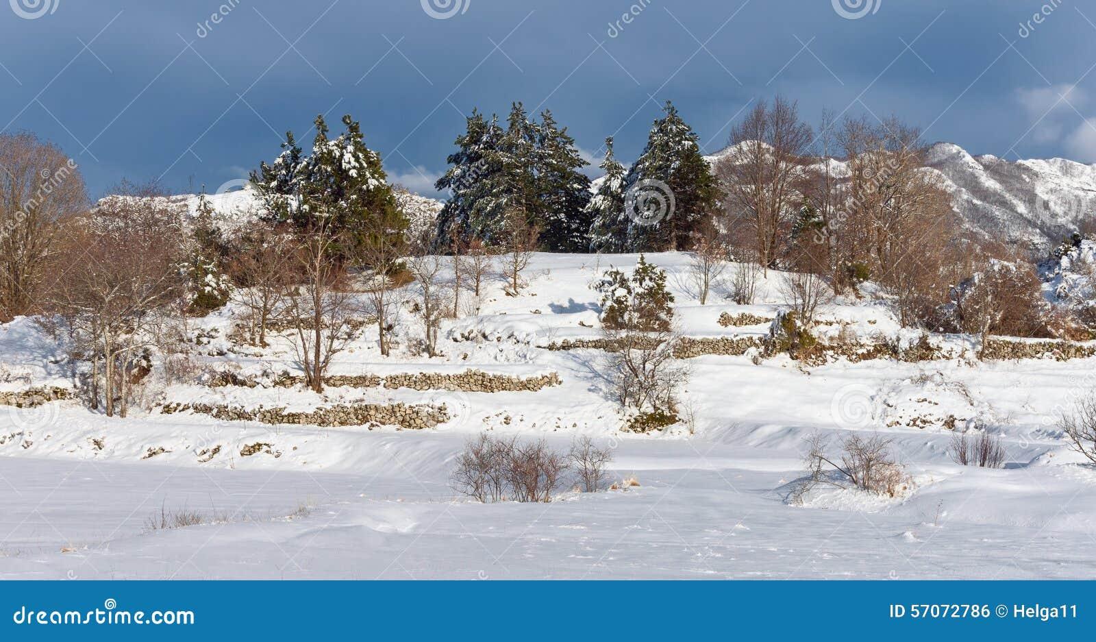 De Bomen van de winter montenegro